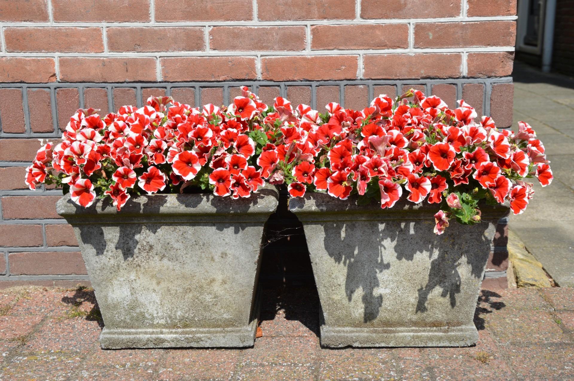 Images gratuites la nature fleur floraison vert for Plante exterieur fleur rouge