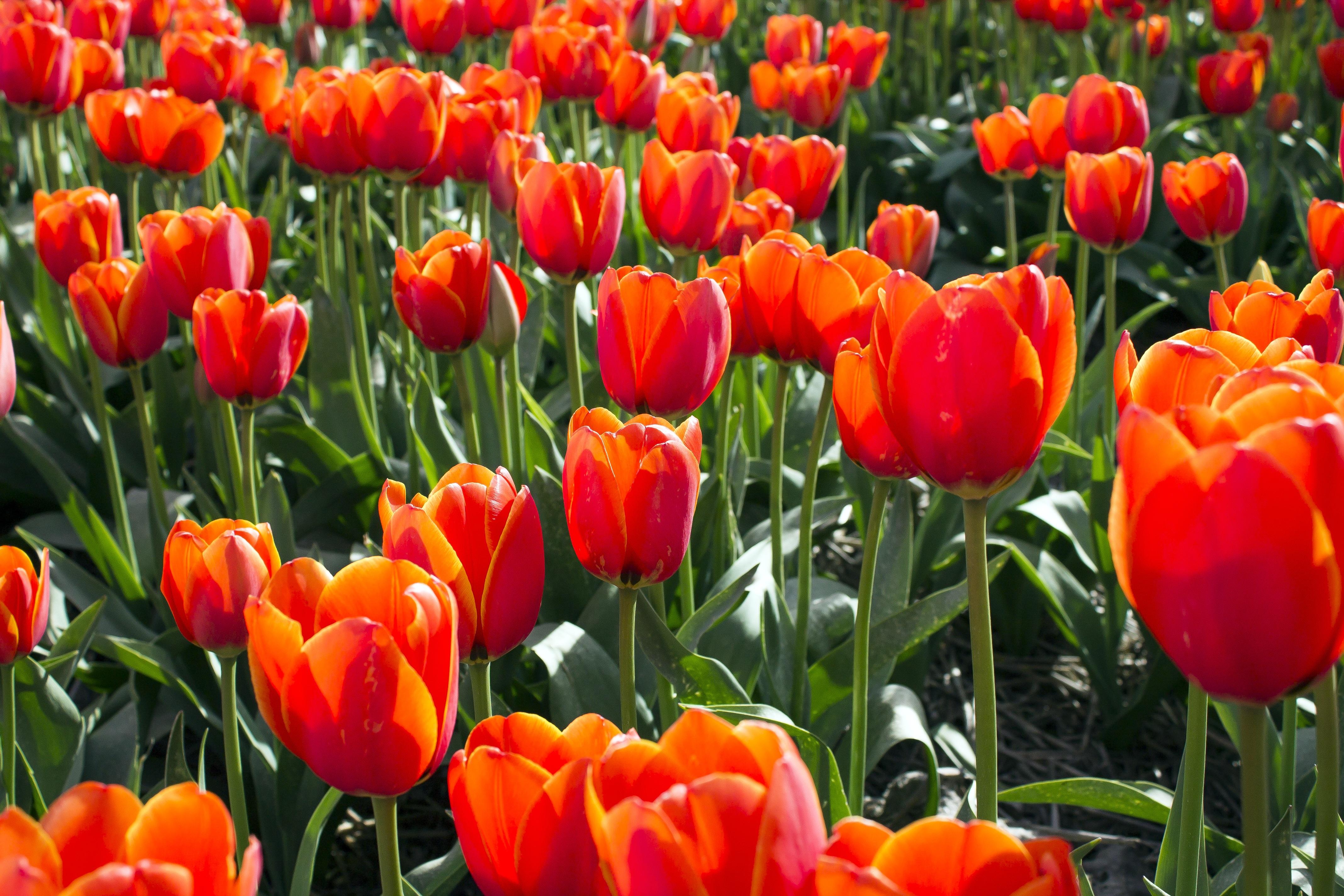 free images nature flower bloom summer orange spring green red tourism plants. Black Bedroom Furniture Sets. Home Design Ideas