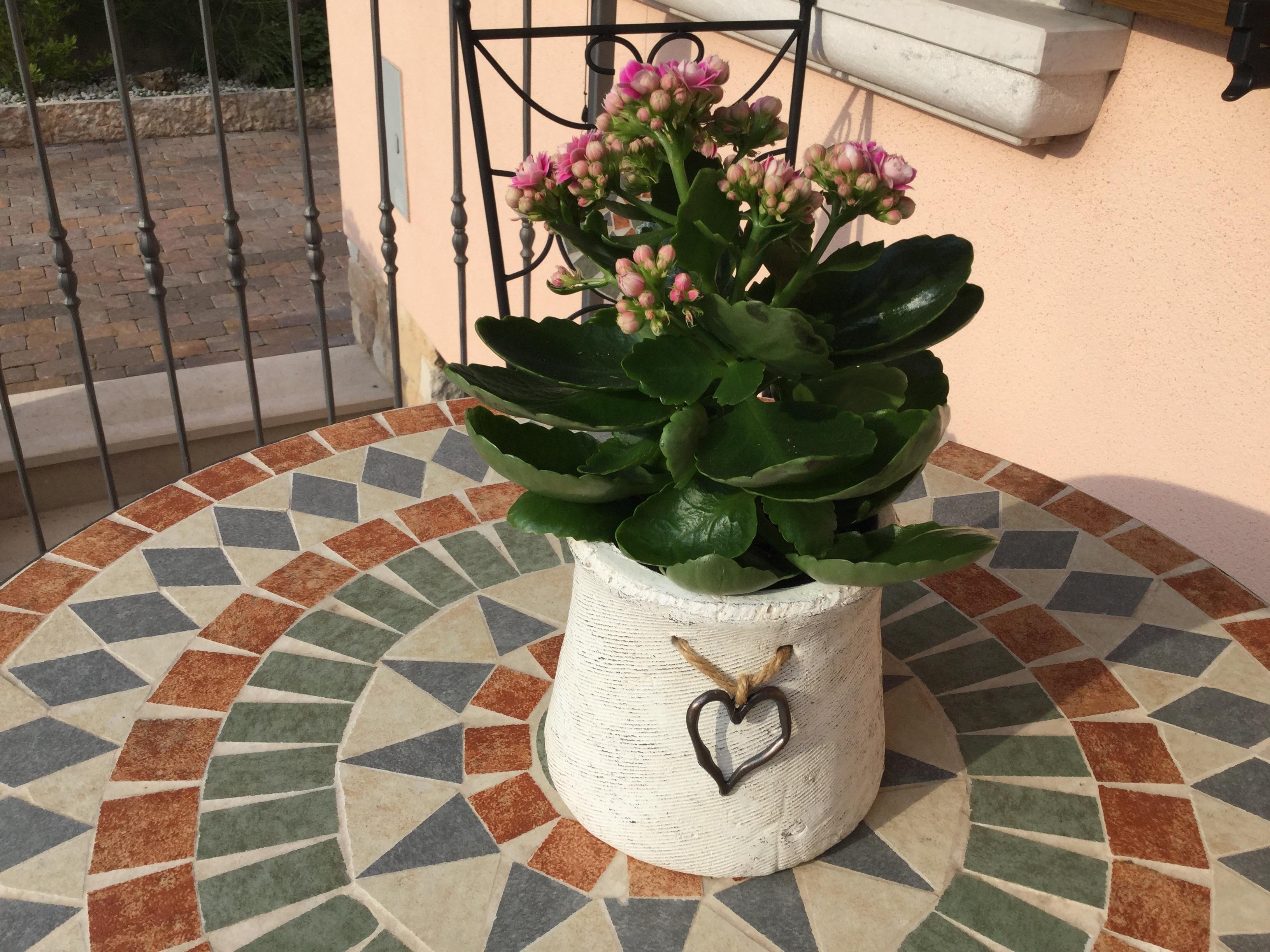 Kostenlose foto : Natur, Blume, blühen, Vase, Frühling, Farbe ...