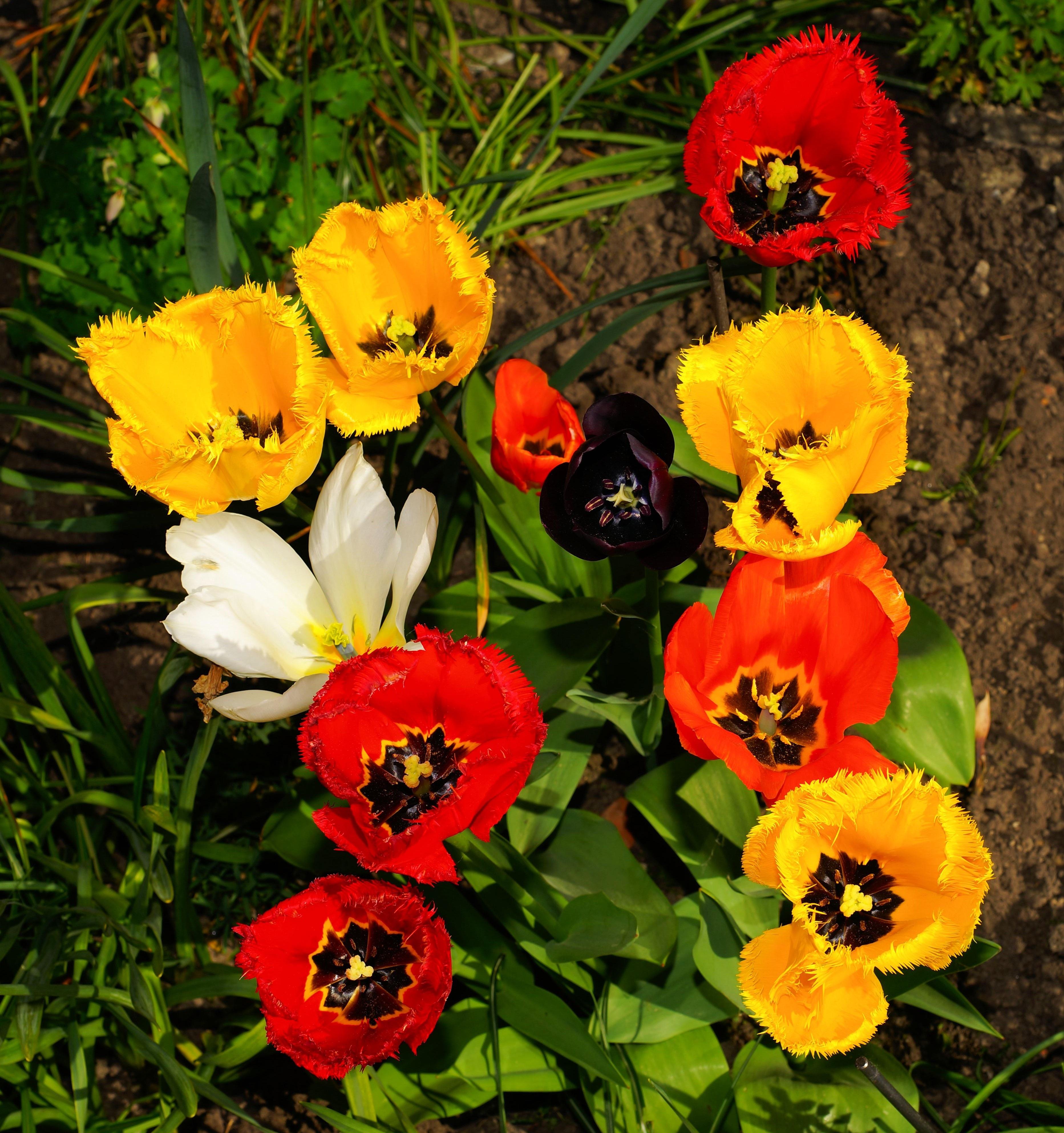 Free Images : nature, flower, decoration, spring, botany, colorful ...