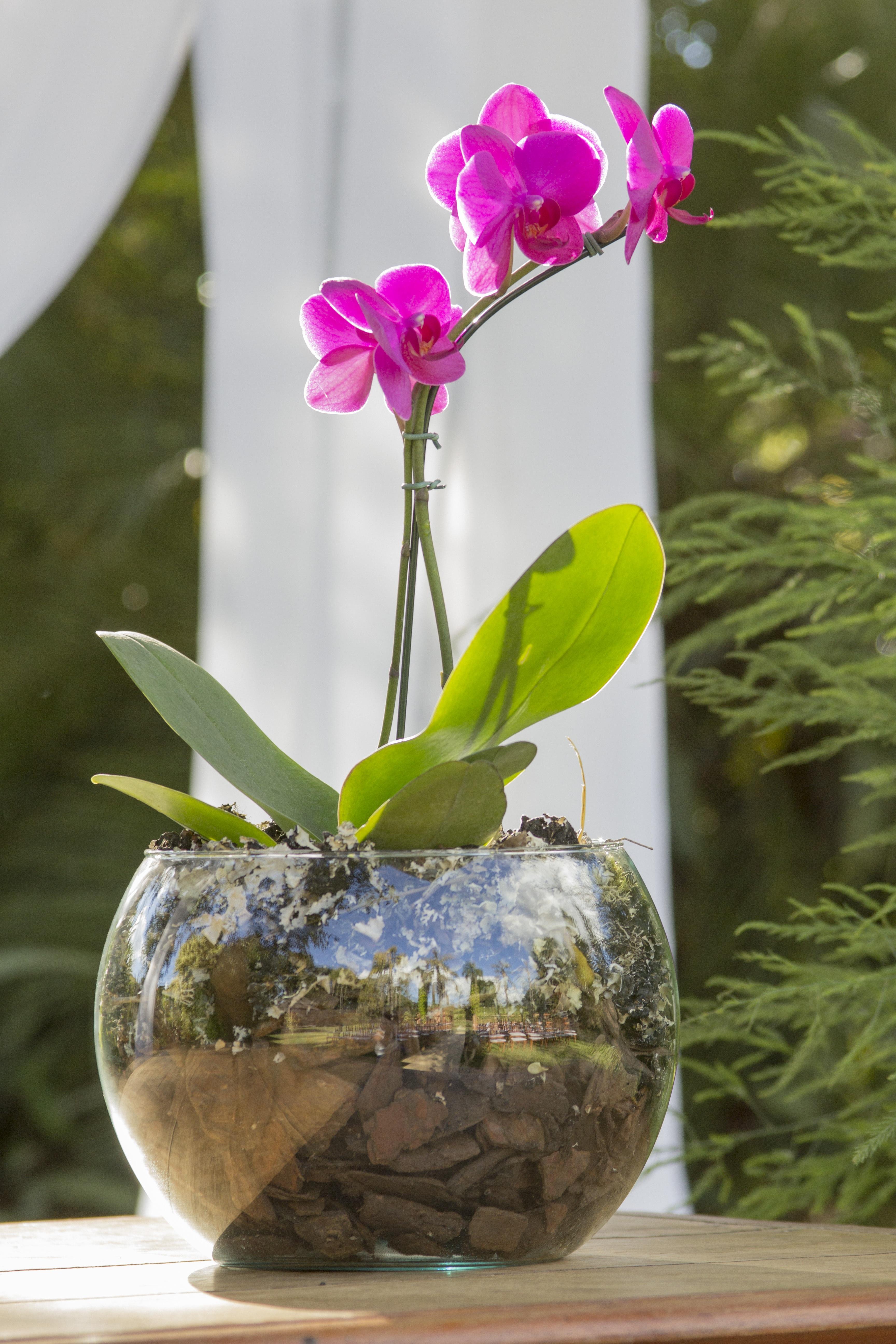 Gambar Alam Menanam Musim Semi Botani Warna Warni Flora