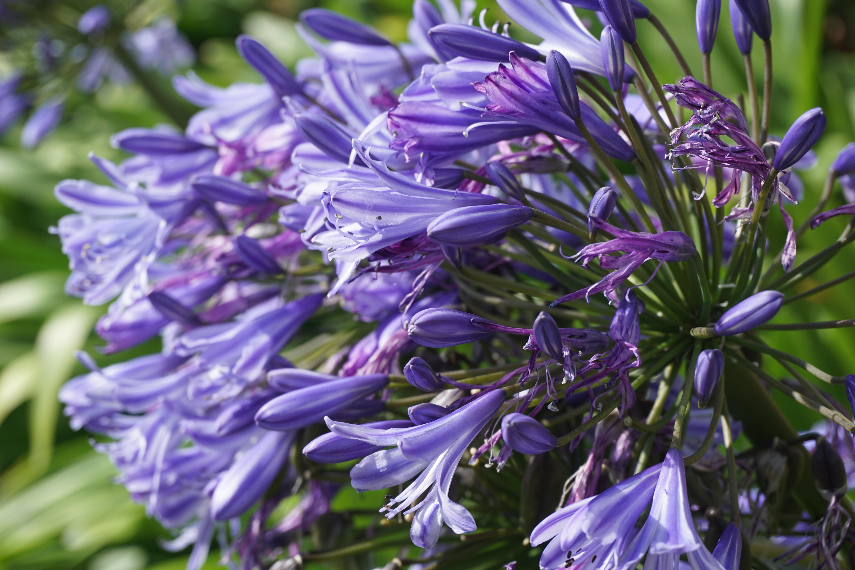 Free Images Nature Floral Herb Produce Vegetable Botany