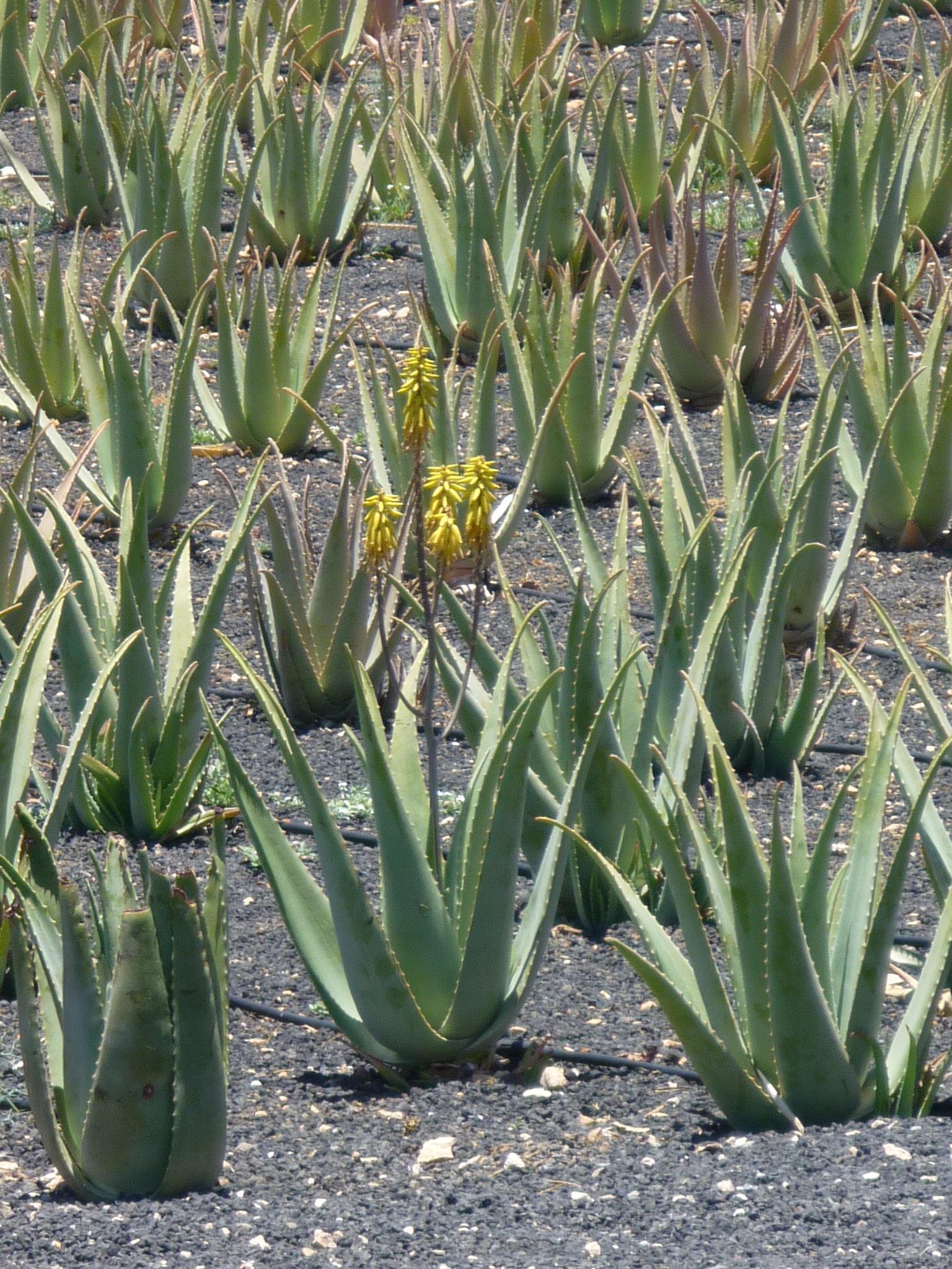 Images Gratuites La Nature Fleur Vert Botanique Jardin Flore