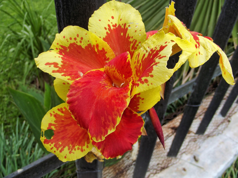 Images Gratuites La Nature Fleur Orange Couleur Botanique