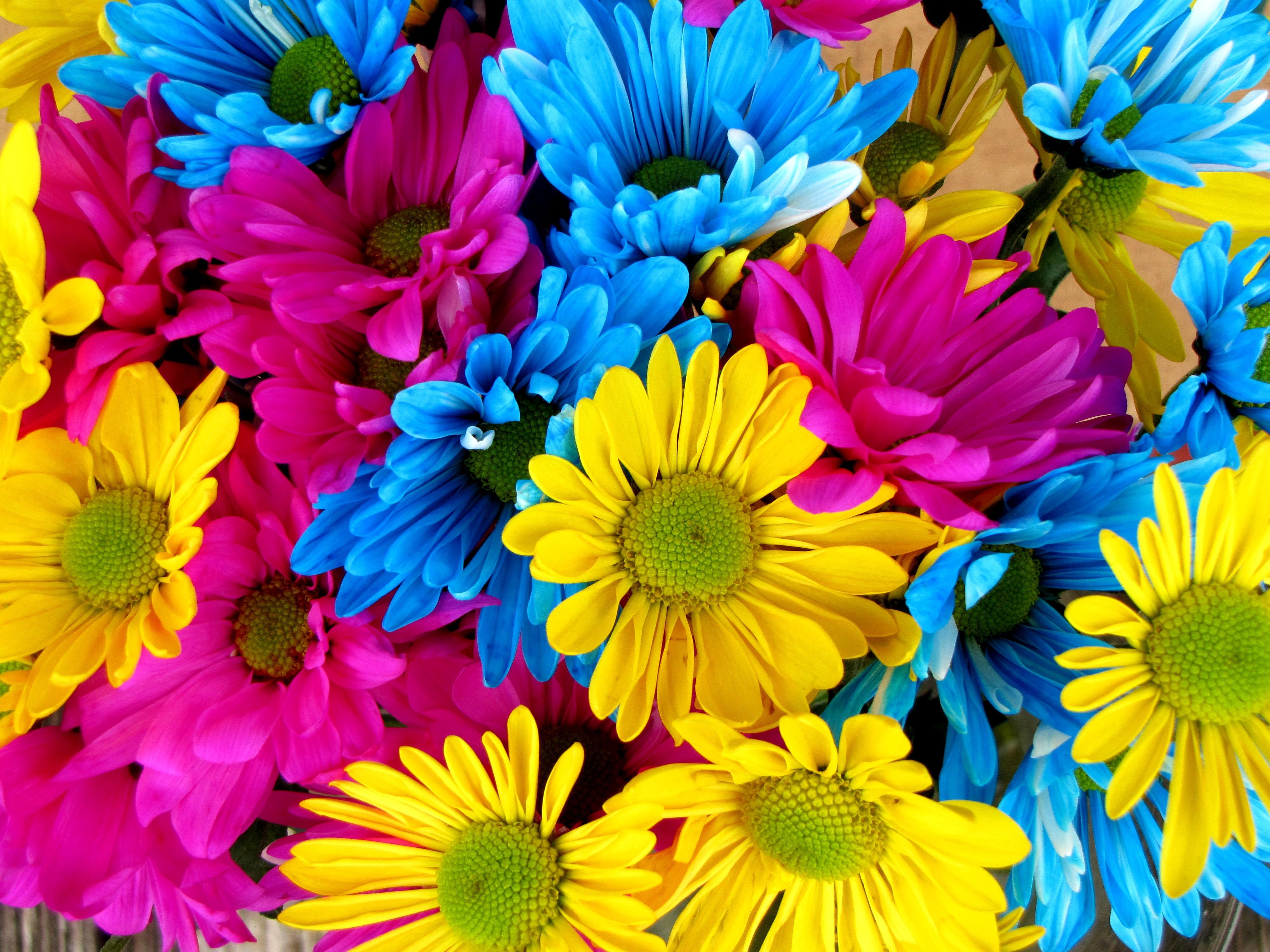 яркие цветочки без смс