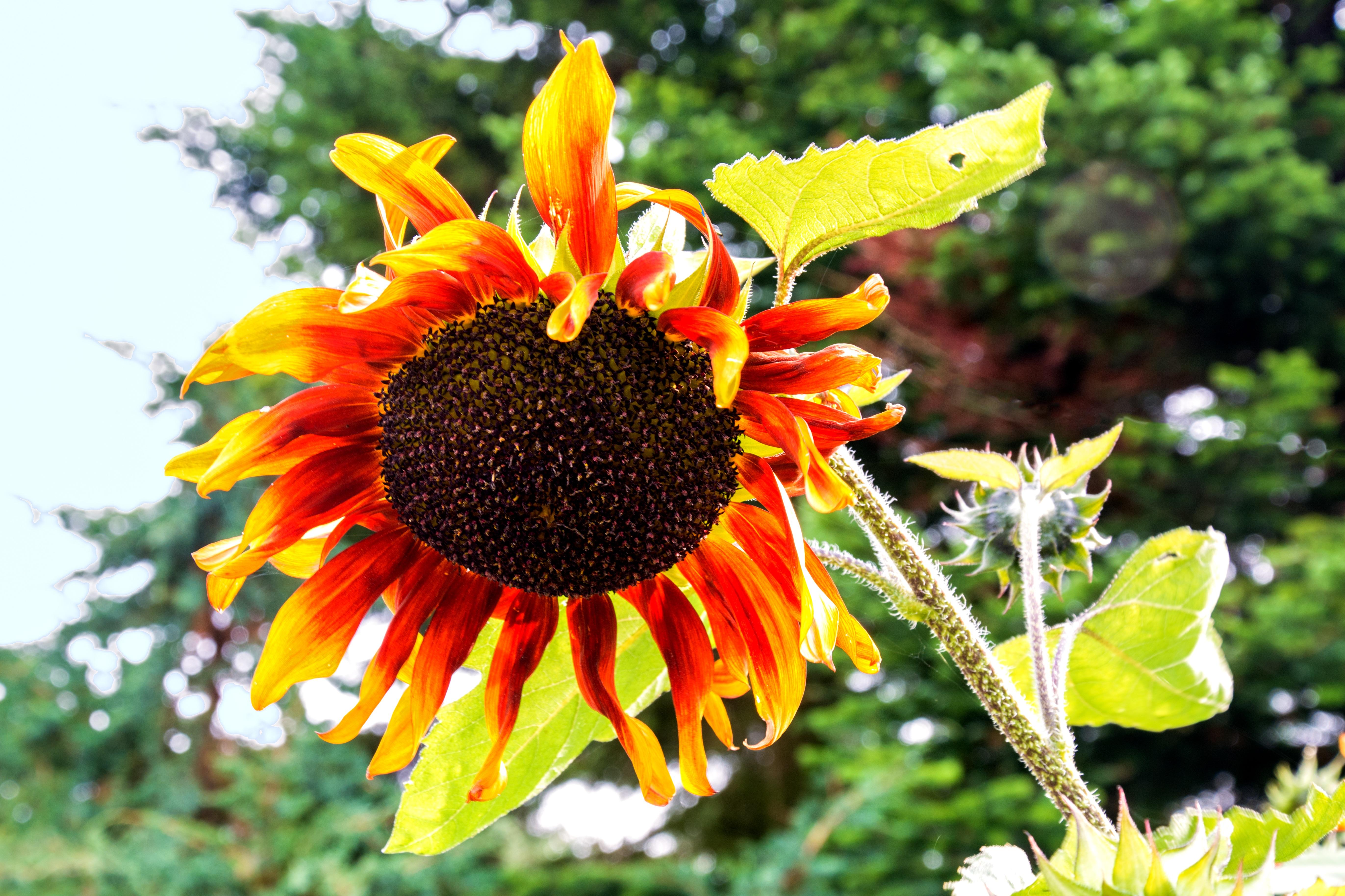 Images Gratuites : la nature, fleur, pétale, Floraison, vert, l ...