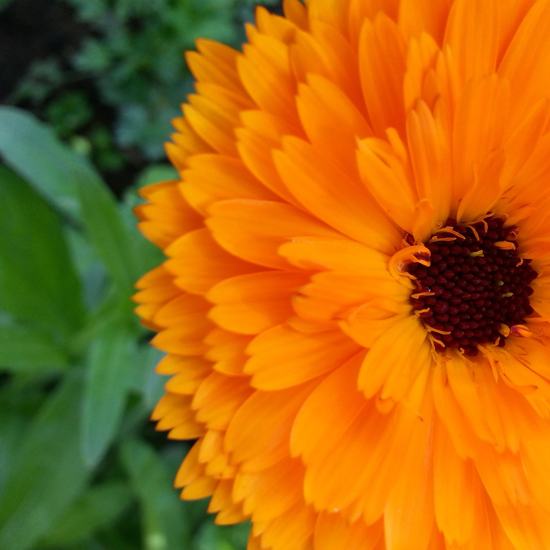 Free Images Nature Petal Bloom Herb Yellow Closeup Flora
