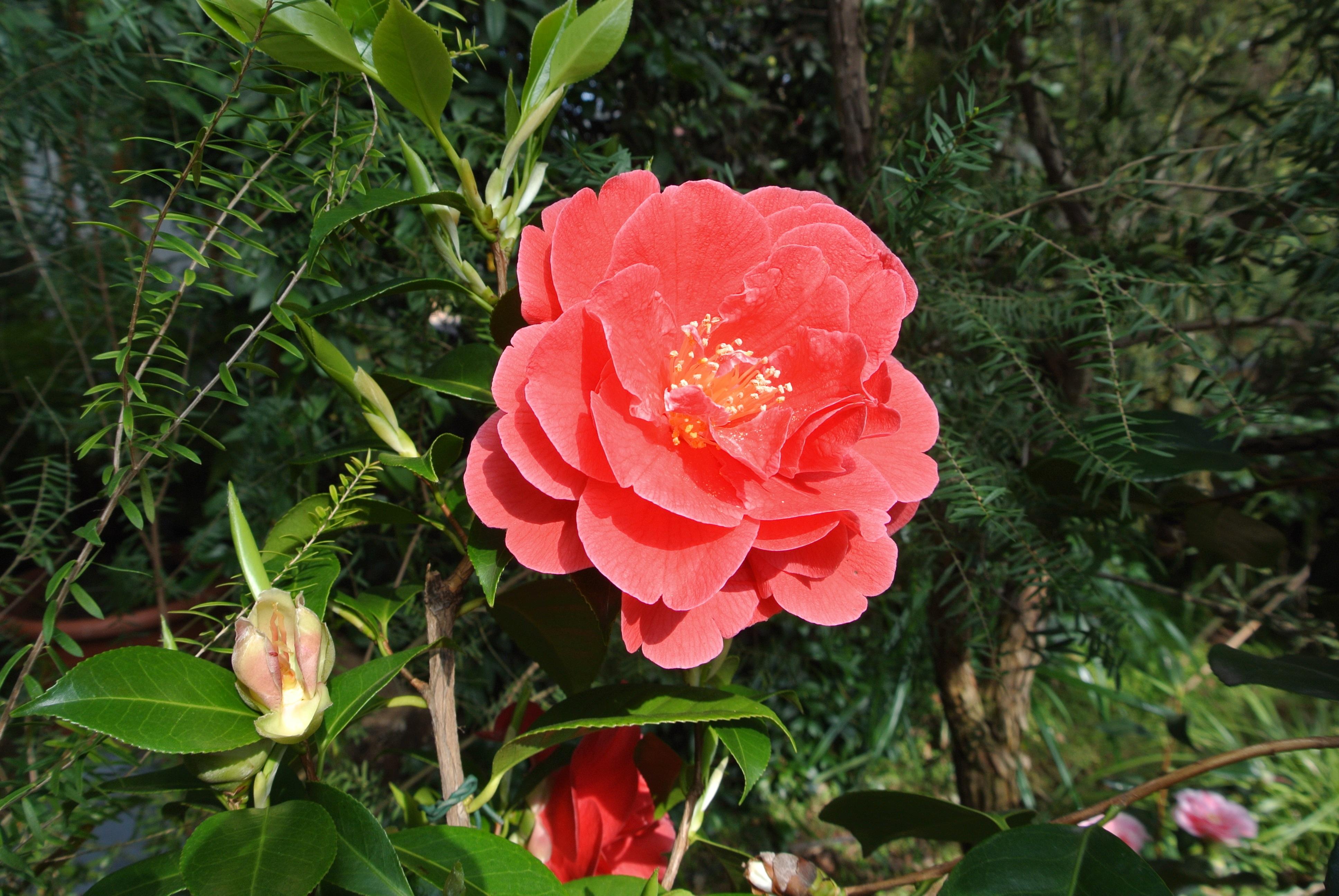 Free Images : nature, flower, petal, spring, red, color, park ...