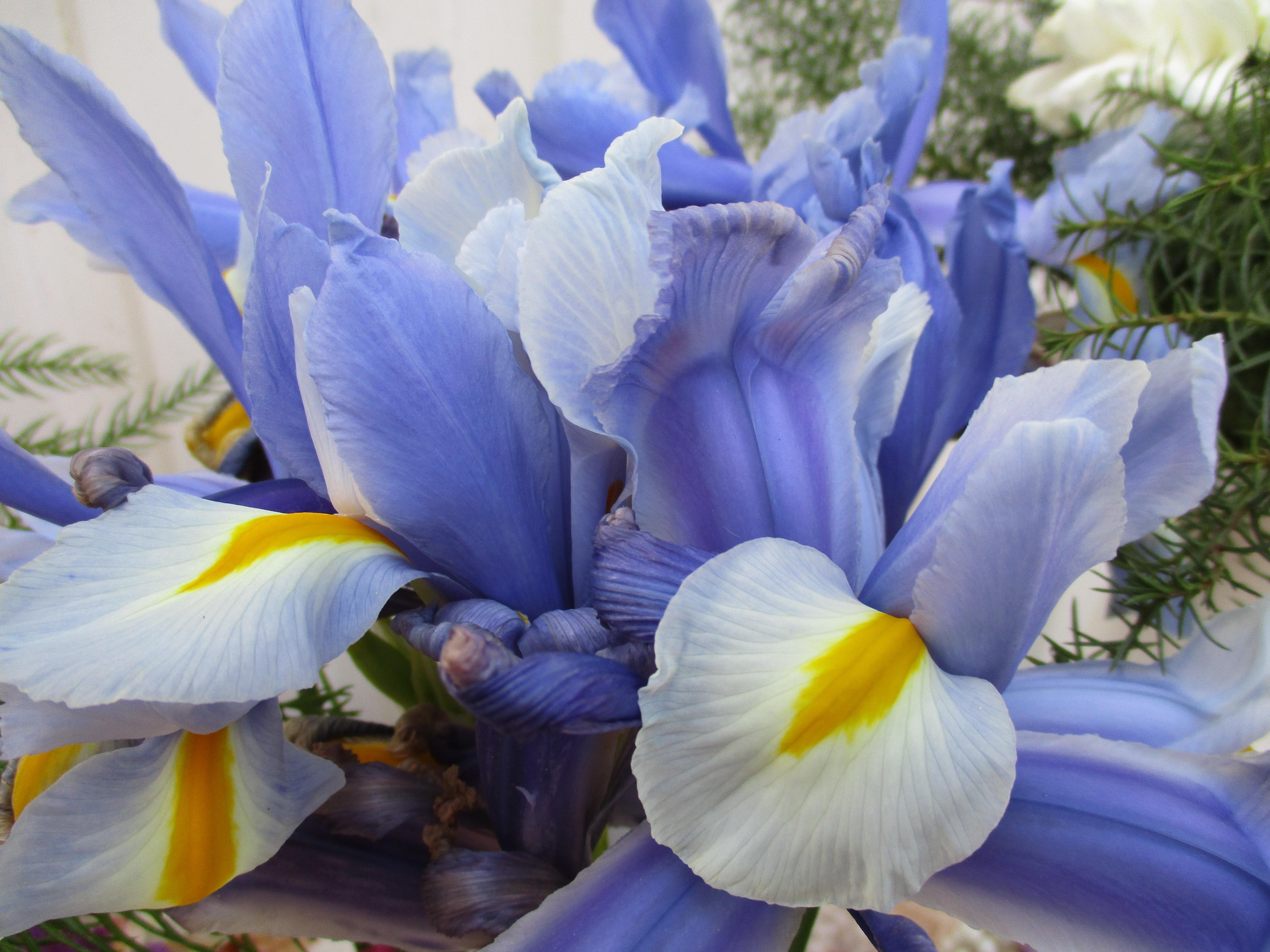 Free Images : nature, flower, petal, bloom, summer, bouquet, spring ...