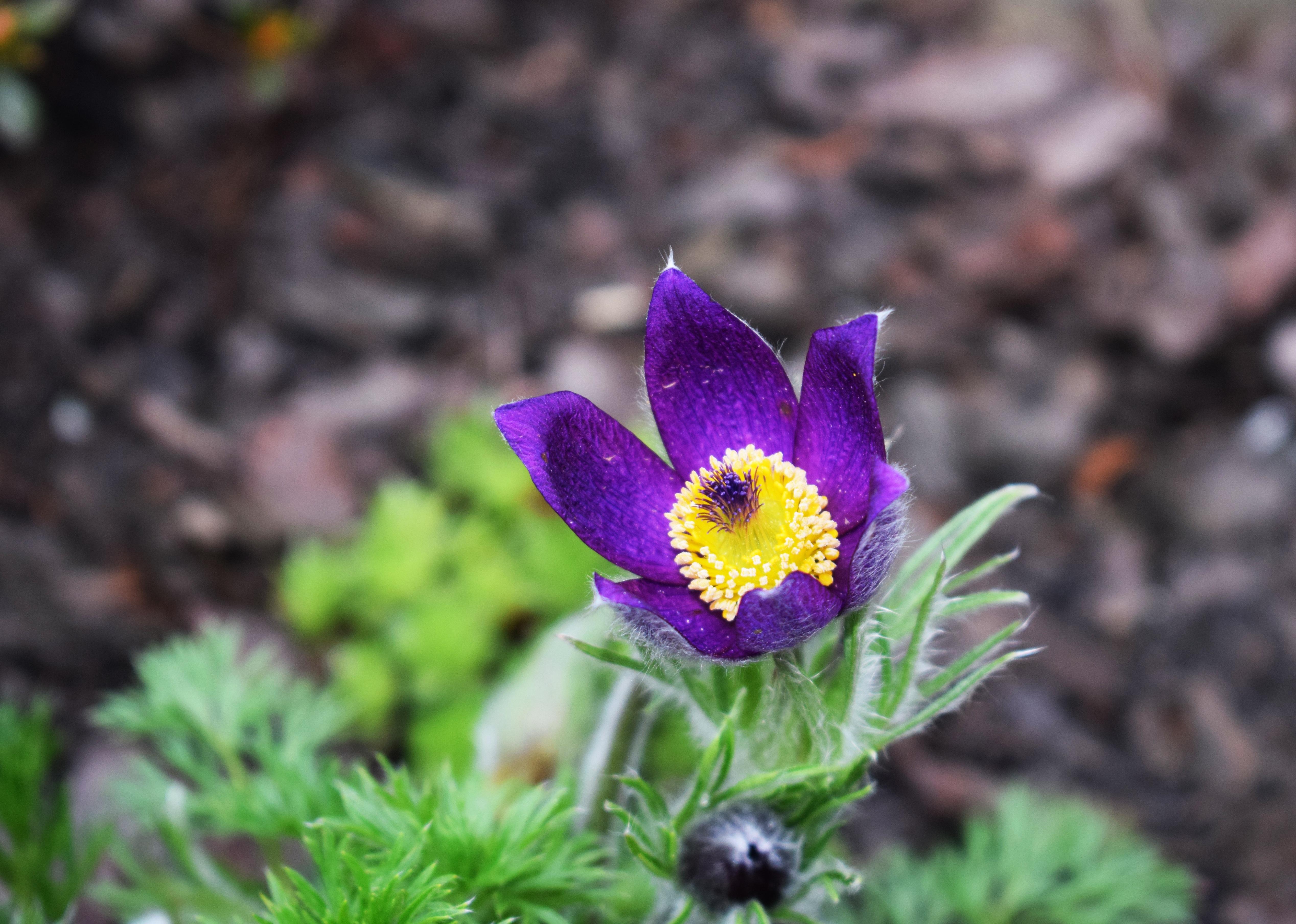 Fiori da giardino primavera estate - Fiori da giardino primavera estate ...