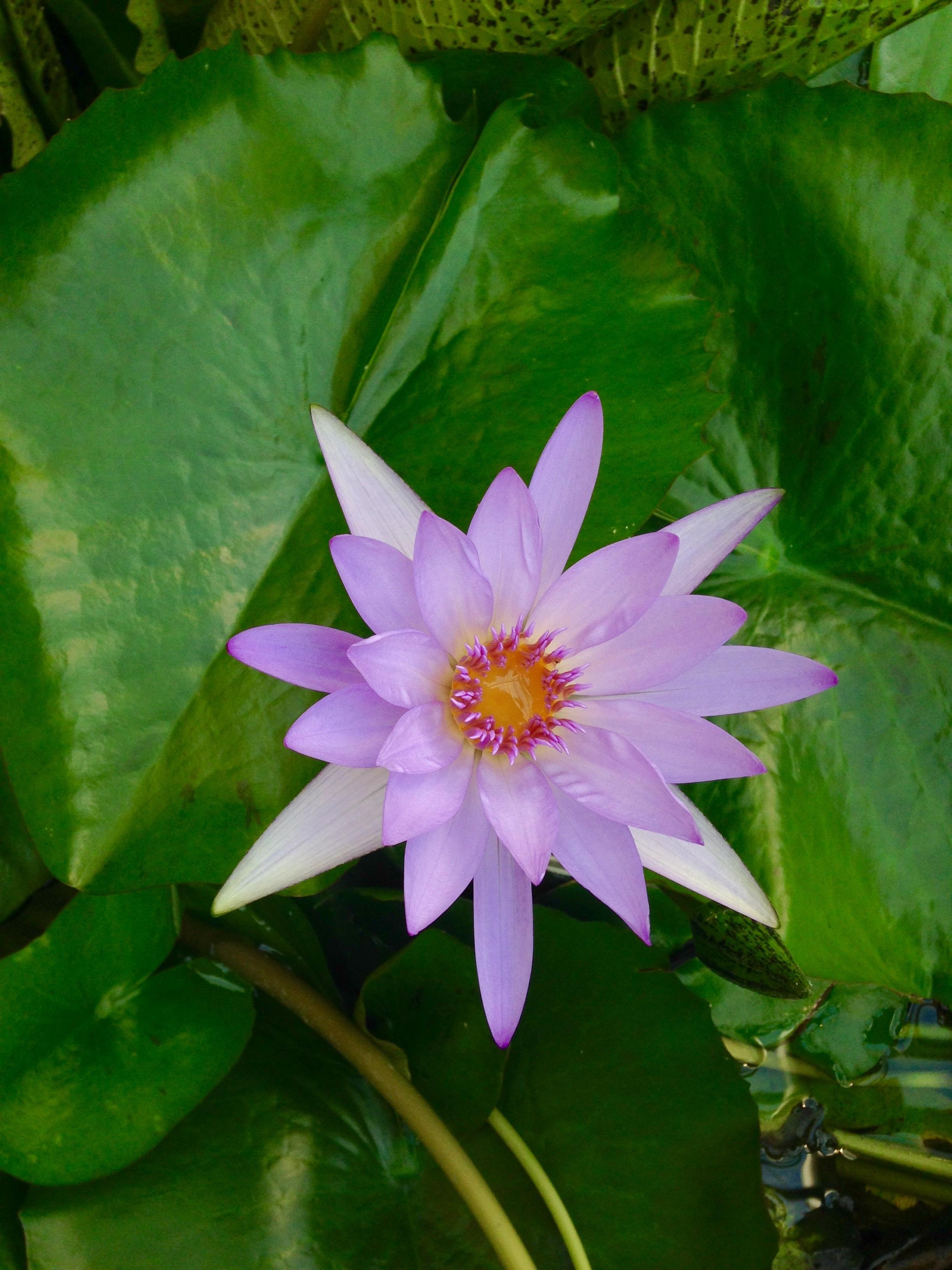 Kostenlose foto : Natur, Blume, Blütenblatt, blühen, Sommer-, Grün ...