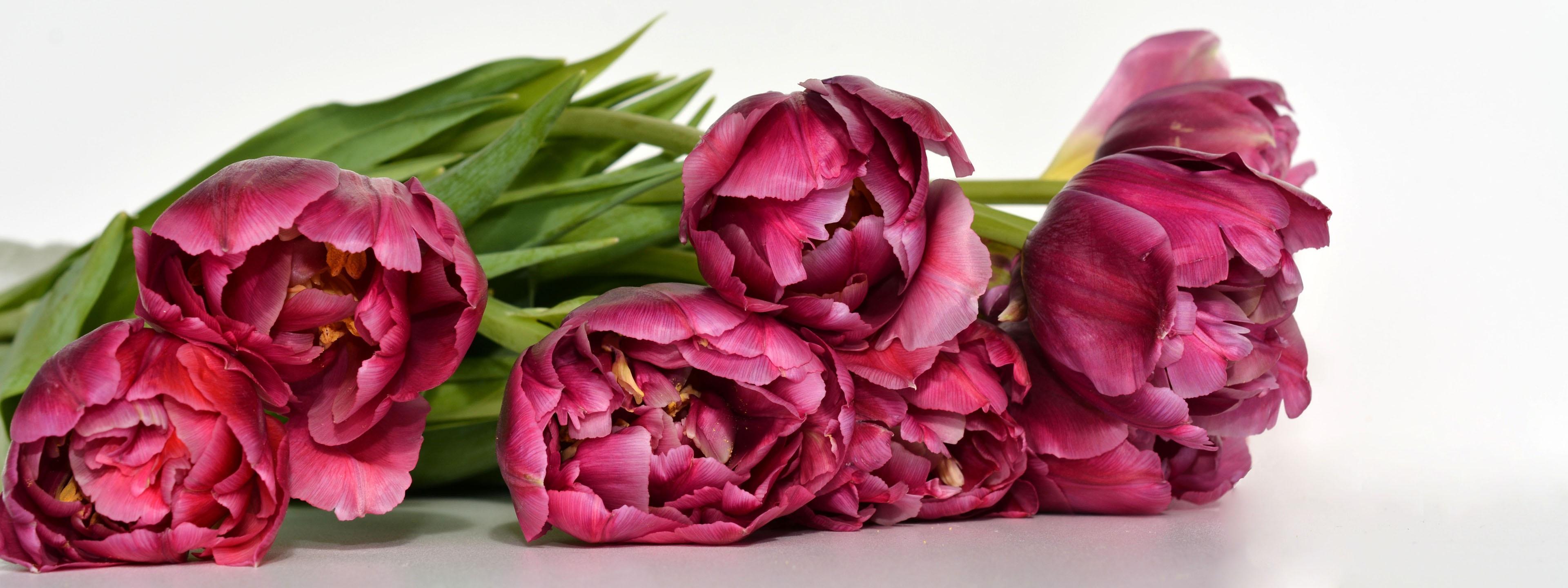 Free images nature flower petal bloom tulip banner pink free images nature flower petal bloom tulip banner pink thank you beautiful elegant tulips magenta bouquet of flowers floristry izmirmasajfo