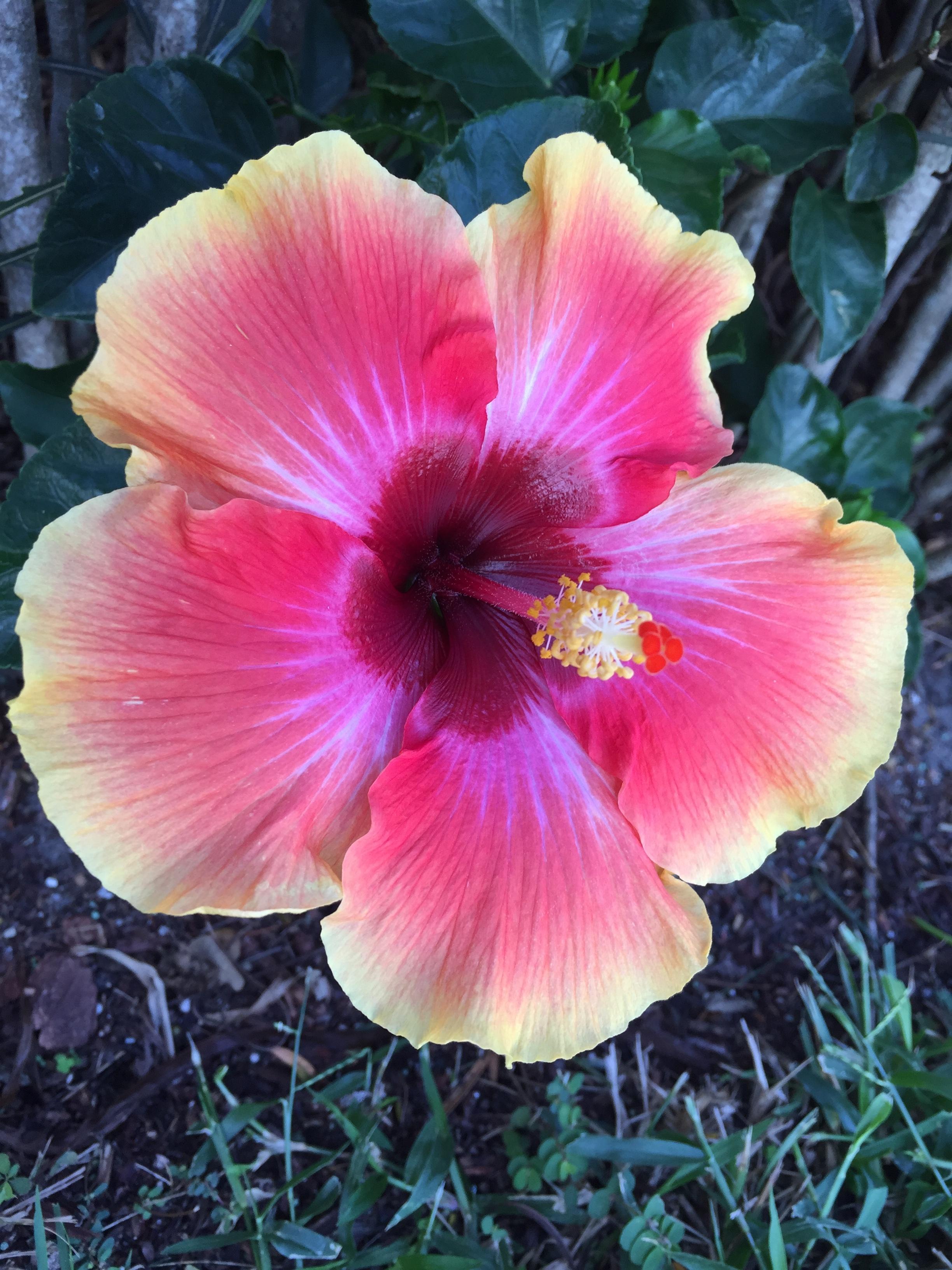 Free Images Nature Petal Botany Garden Flora Petals Pistil
