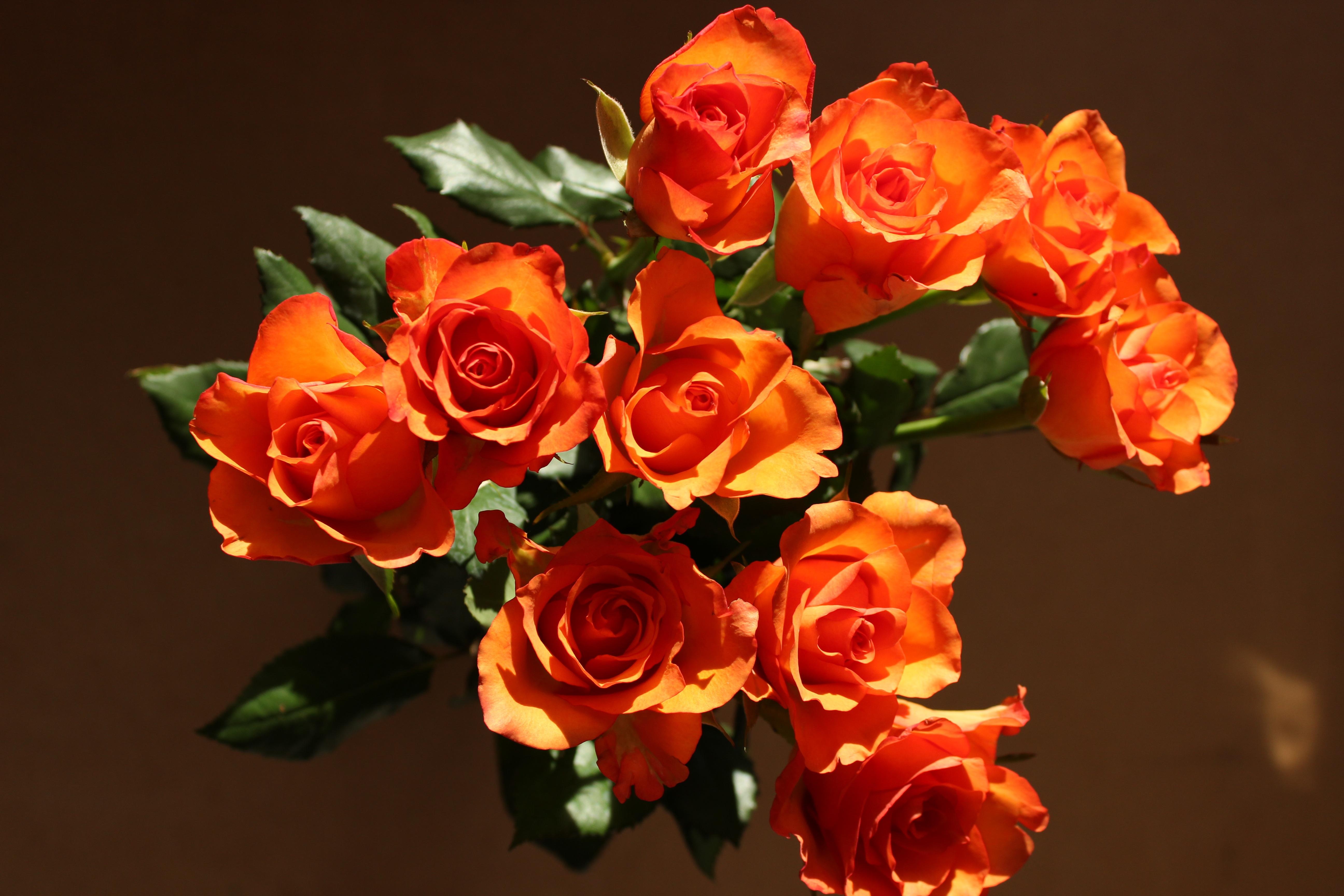 Картинка бледно розовые розы пятницы