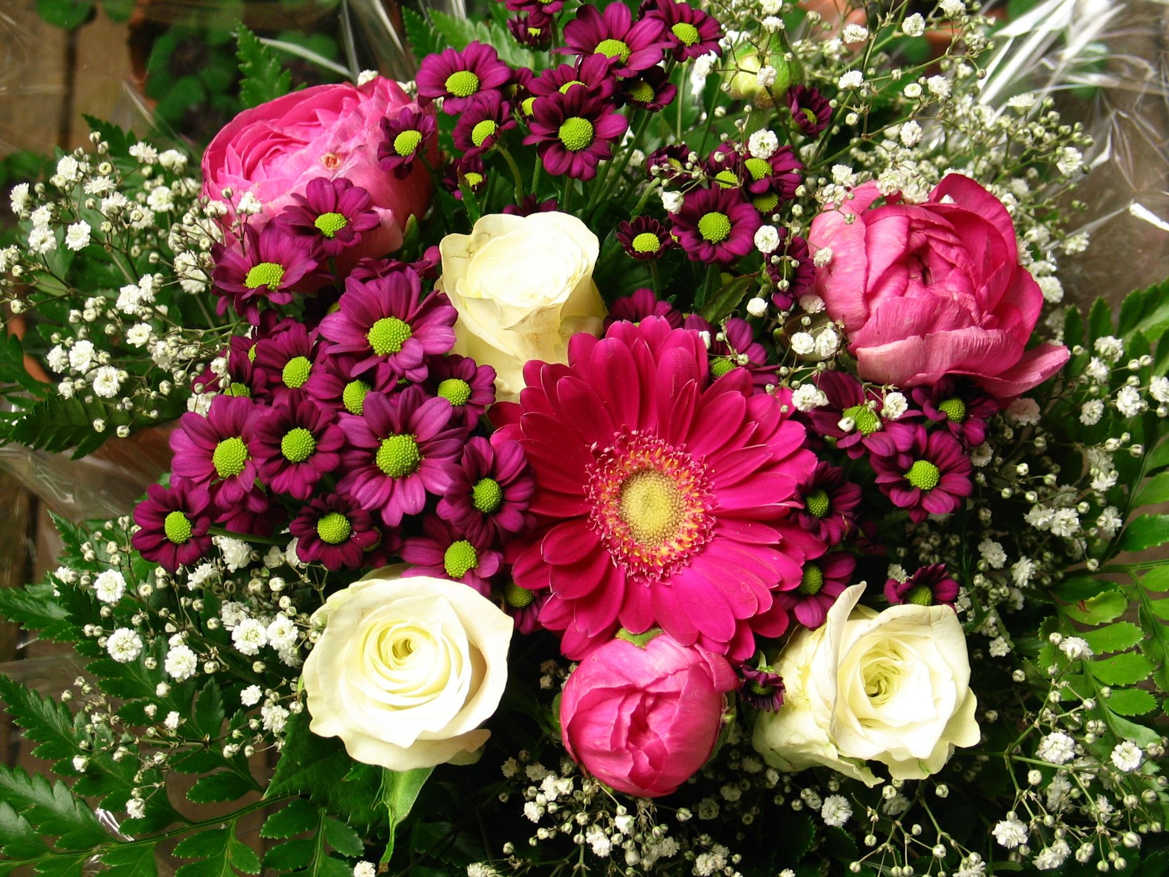 Free Images Nature Petal Celebration Love Romantic Colorful