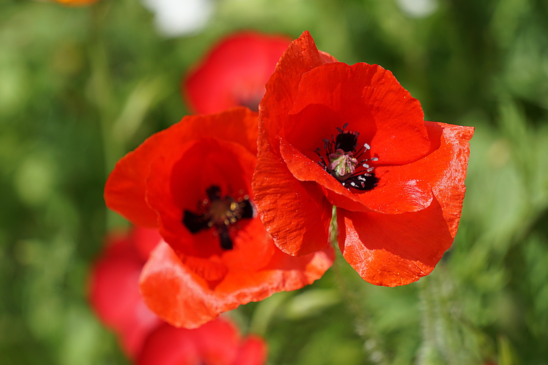 Рисунки и картинки символами цветок этом празднике