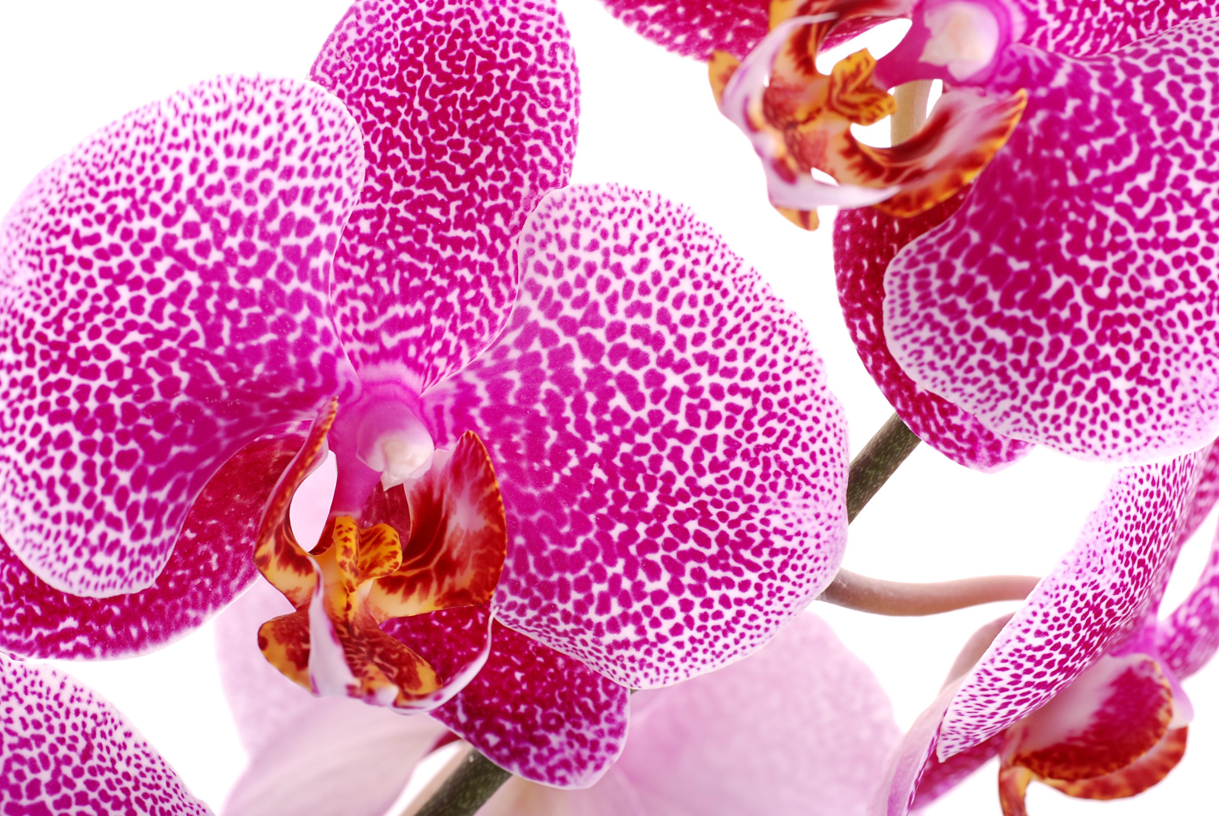 исключено, что орхидея крупным планом фото пользователи