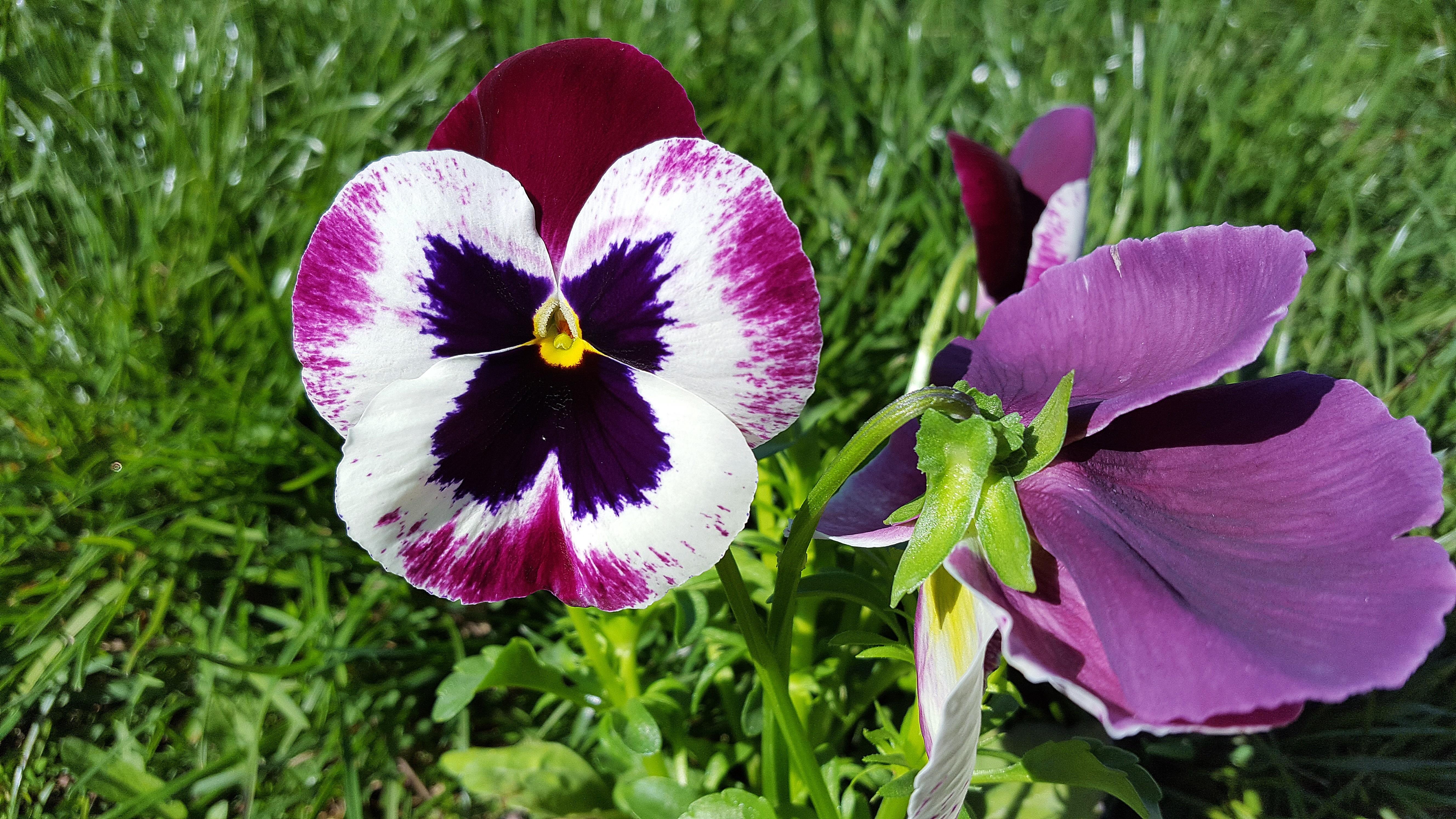 Free Images Nature Petal Floral Spring Botany Flora