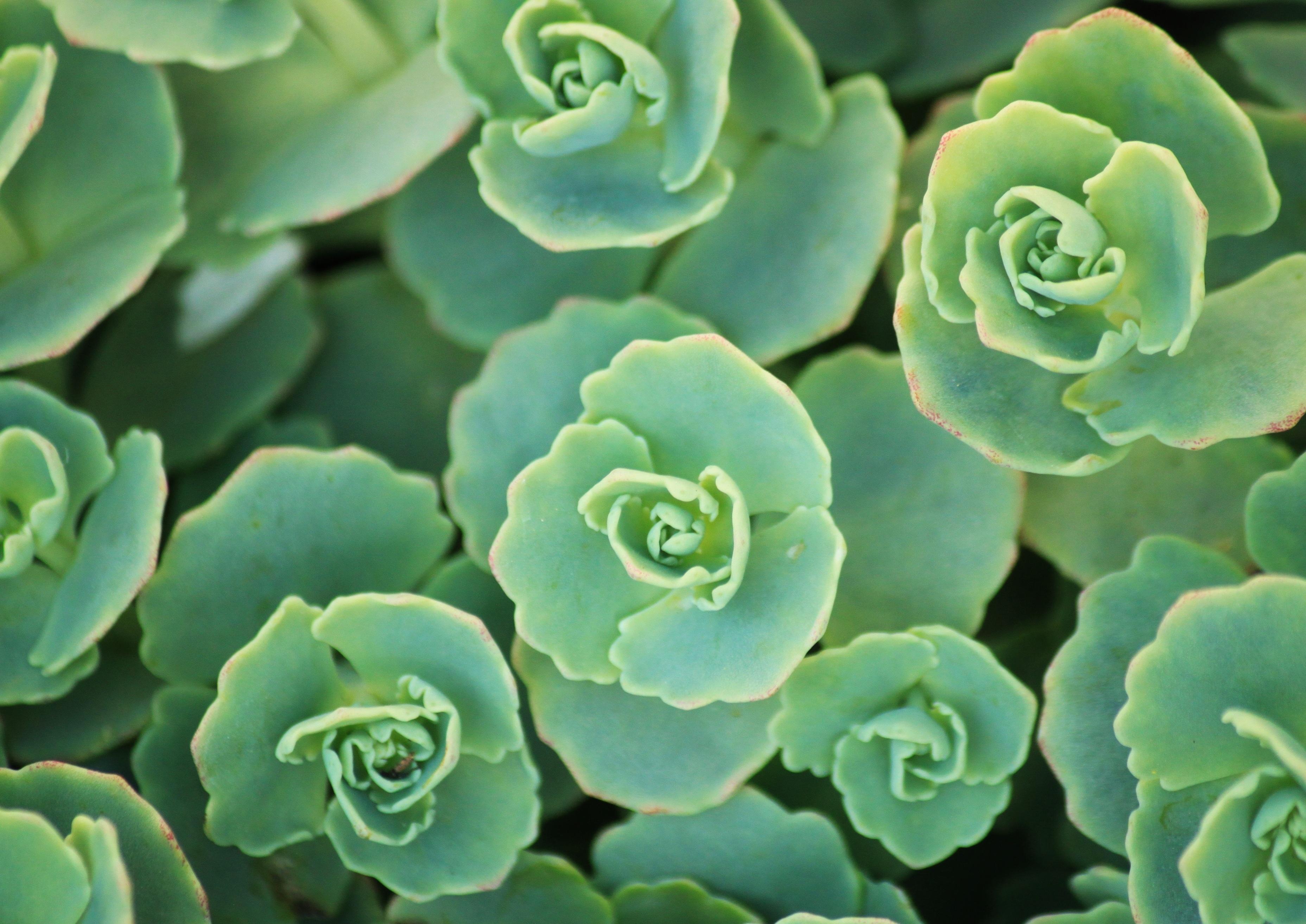 Images Gratuites La Nature Fleur Petale Vert Macro Botanique