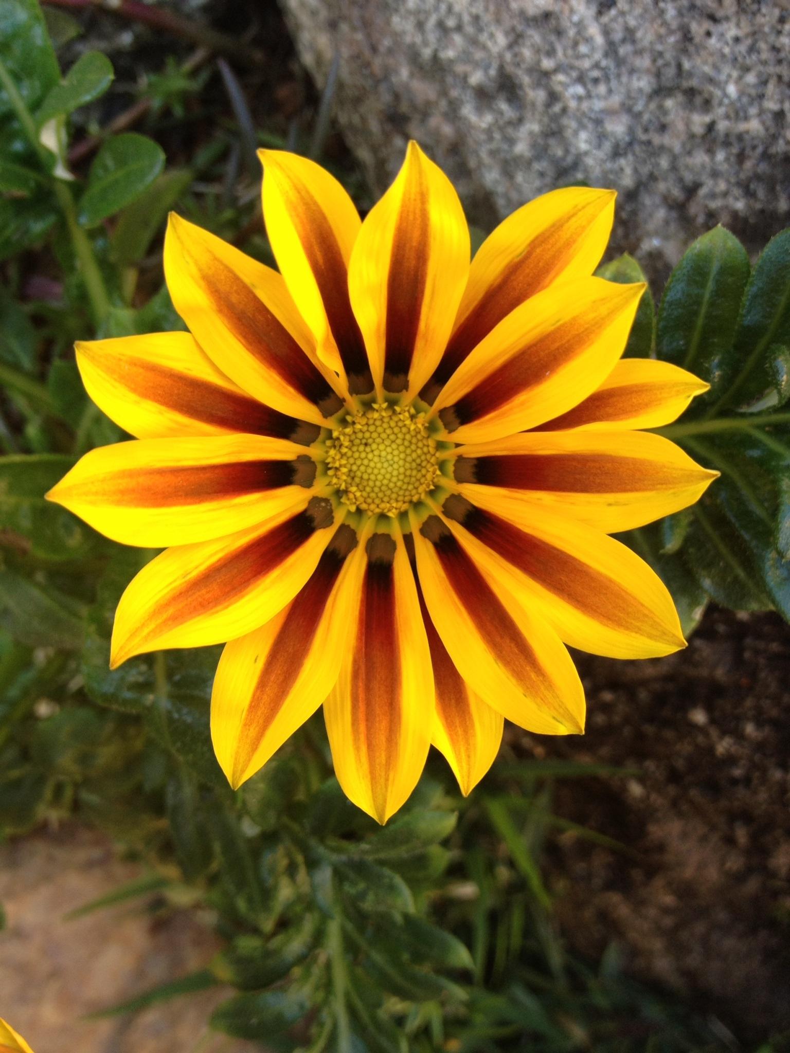 Gambar Alam Menanam Daun Bunga Herba Botani Warna Warni