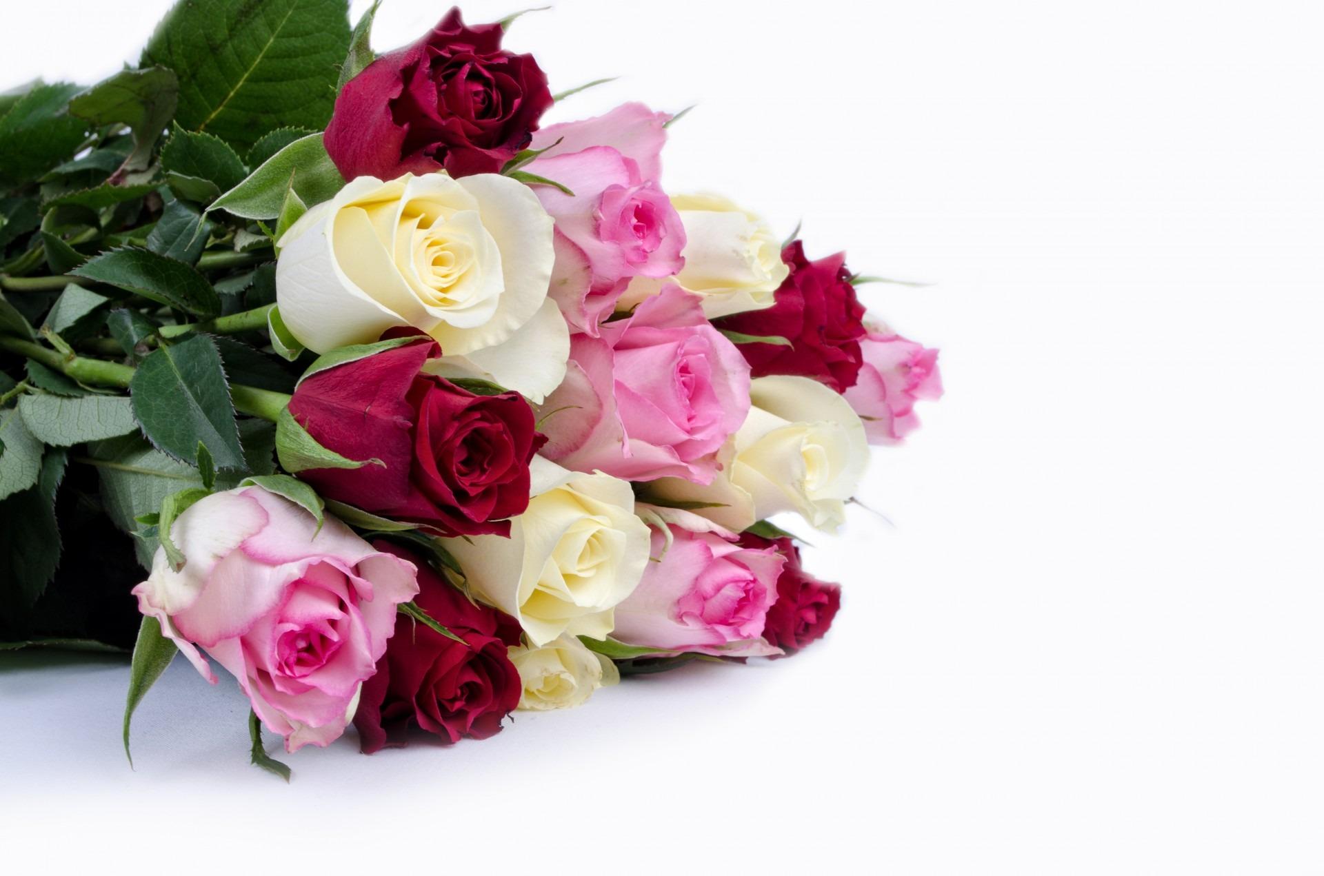 Фото цветов на день рождения розы