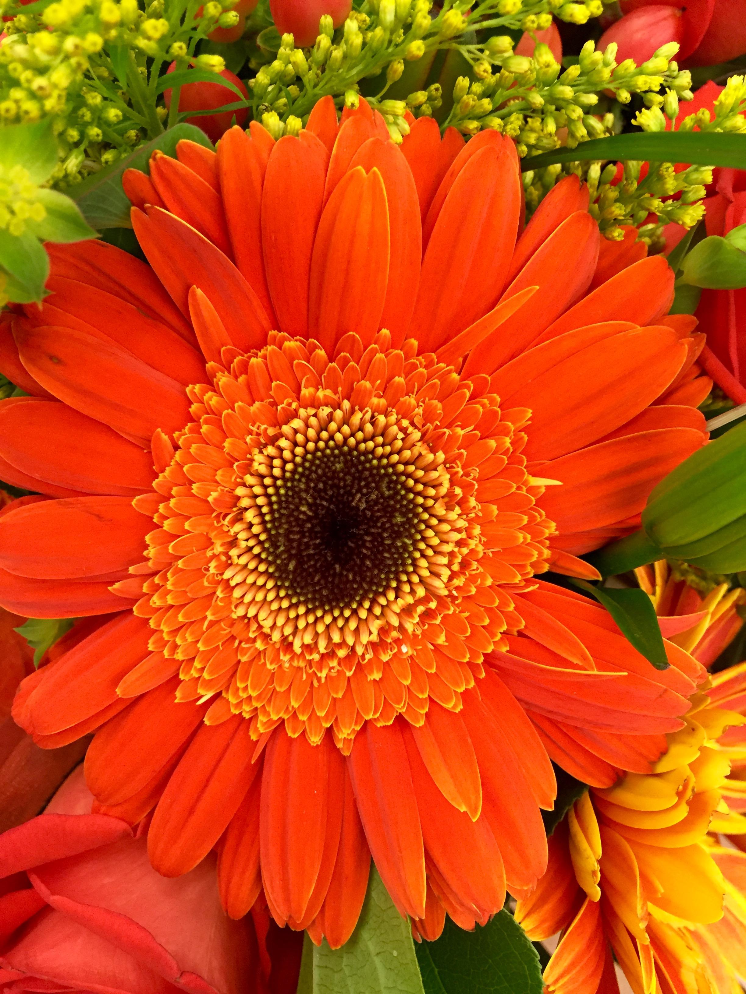 Картинка цветок оранжевый