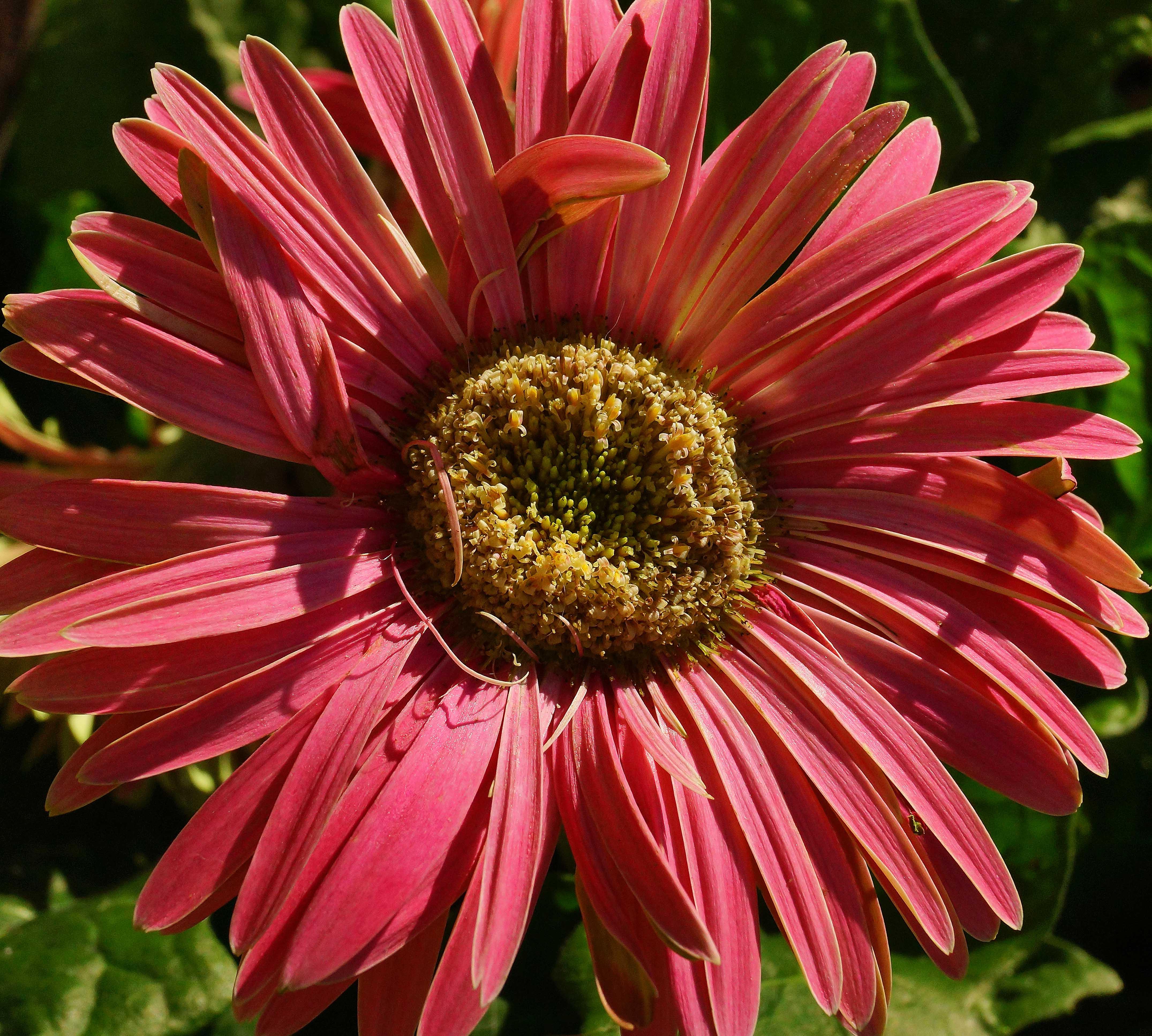 Free Images Nature Flower Petal Photo Botany Flora