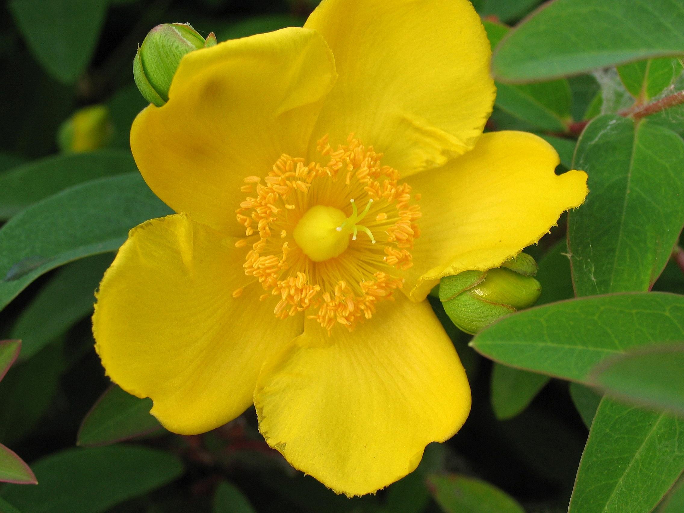 Free Images Nature Petal Produce Botany Flora Yellow Flower