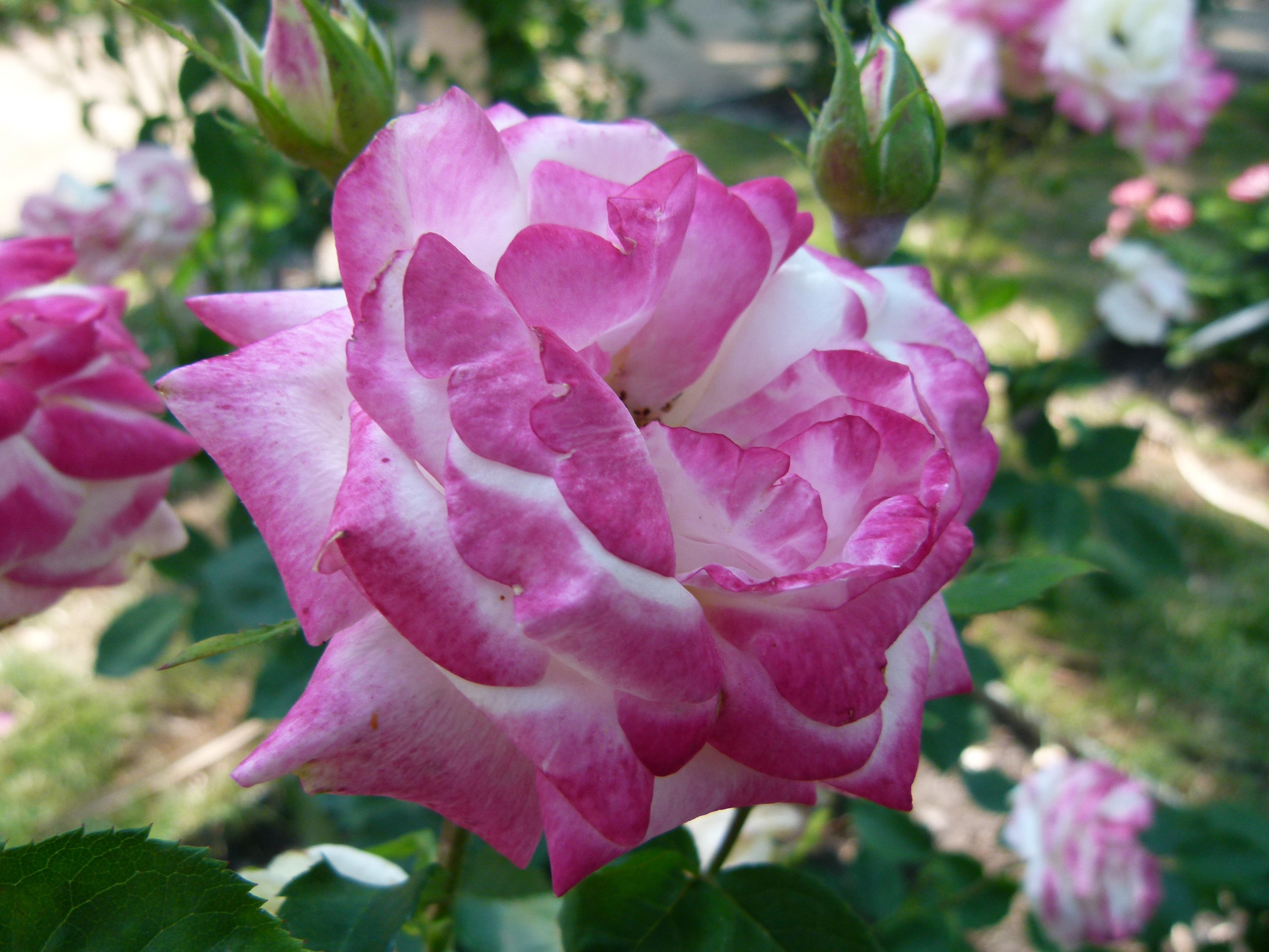 Immagini belle natura petalo botanica flora for Pianta fiorita da esterno
