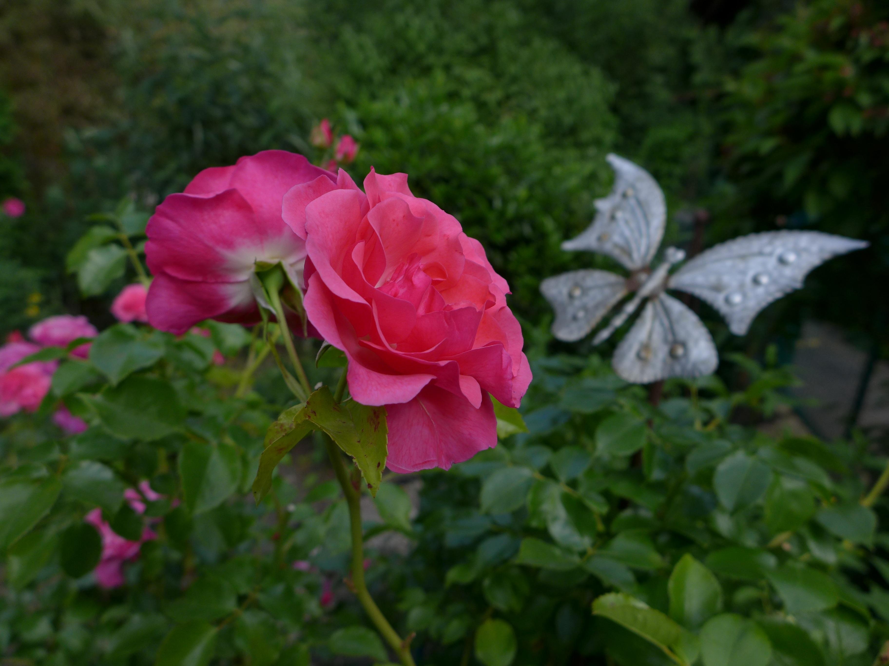 Immagini belle : natura petalo verde botanica farfalla flora