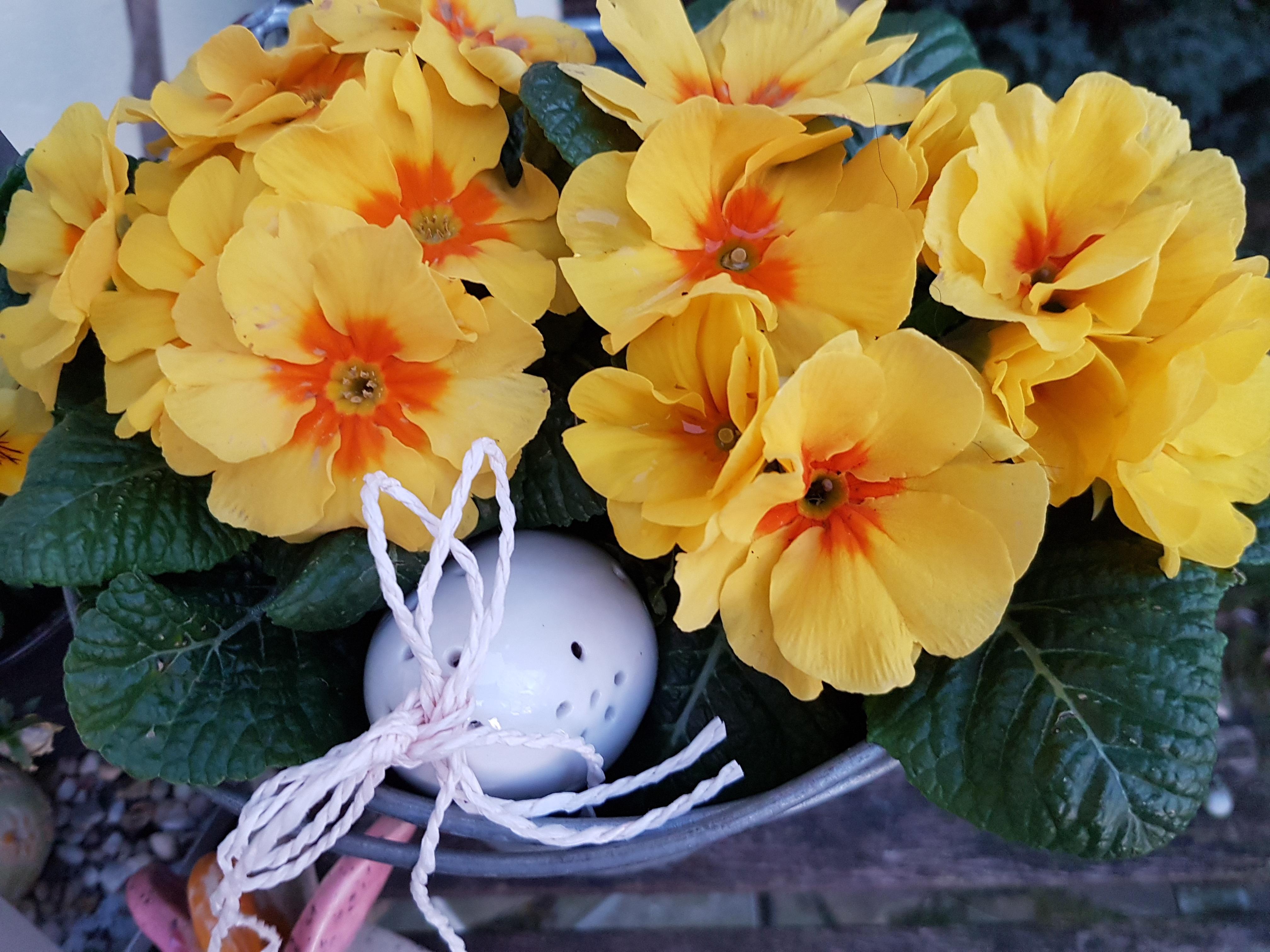 Free Images : nature, petal, botany, close, flora, yellow flower ...