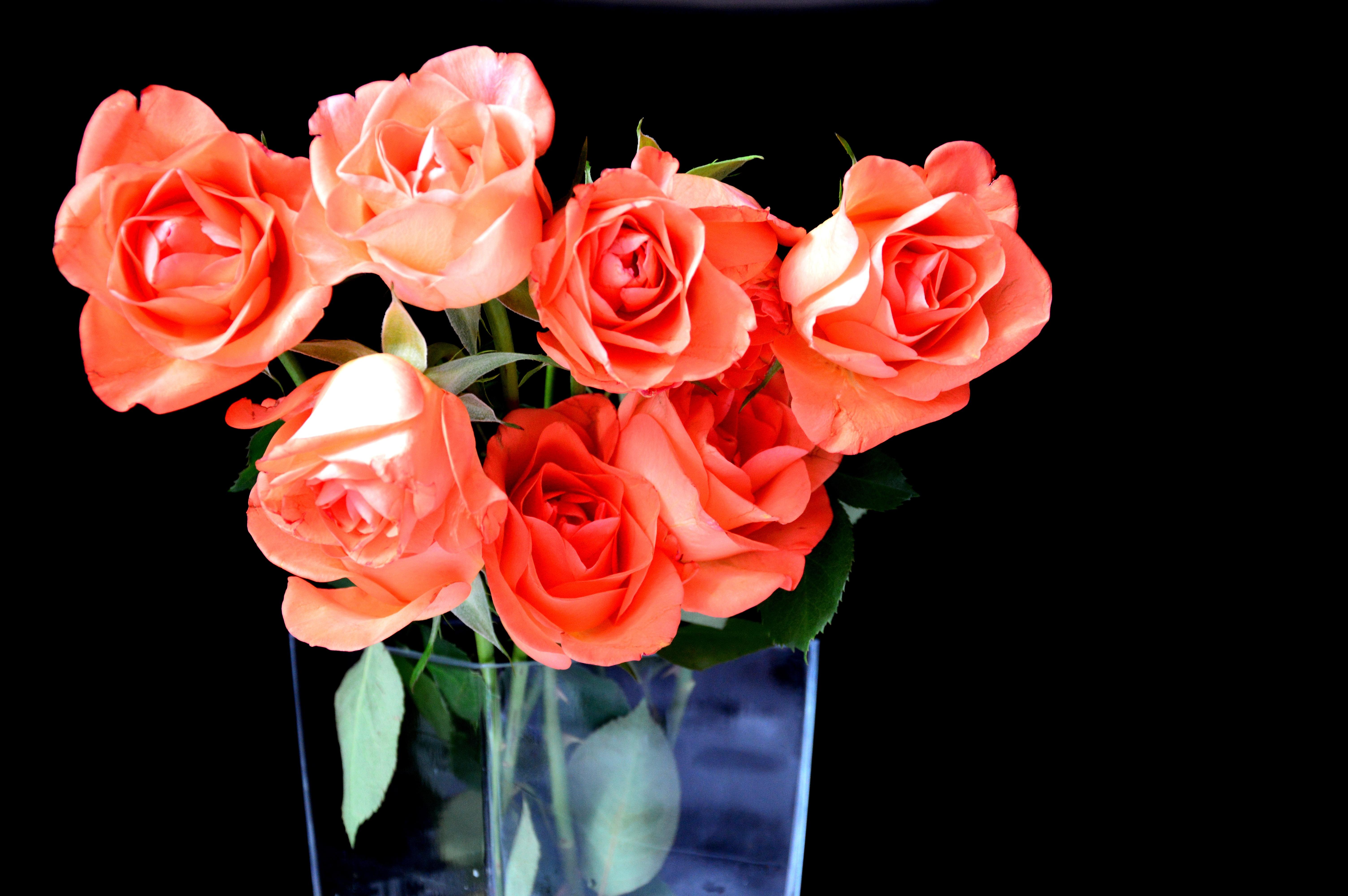 Free images nature petal summer vase decoration red pink free images nature petal summer vase decoration red pink composition bouquet of flowers floristry bunch of flowers floribunda dining table izmirmasajfo