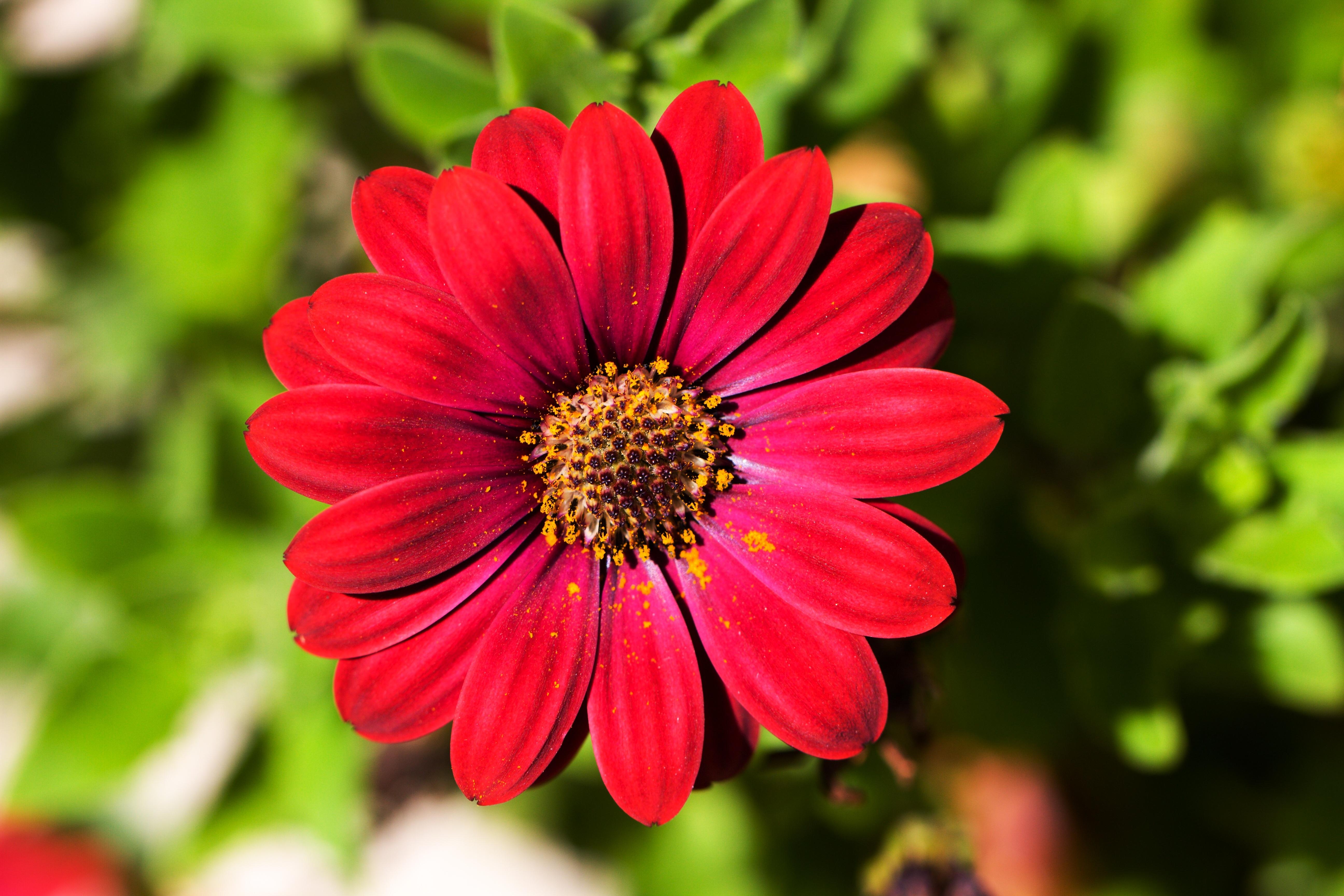 Gambar alam menanam daun bunga musim panas bunga for Una planta ornamental