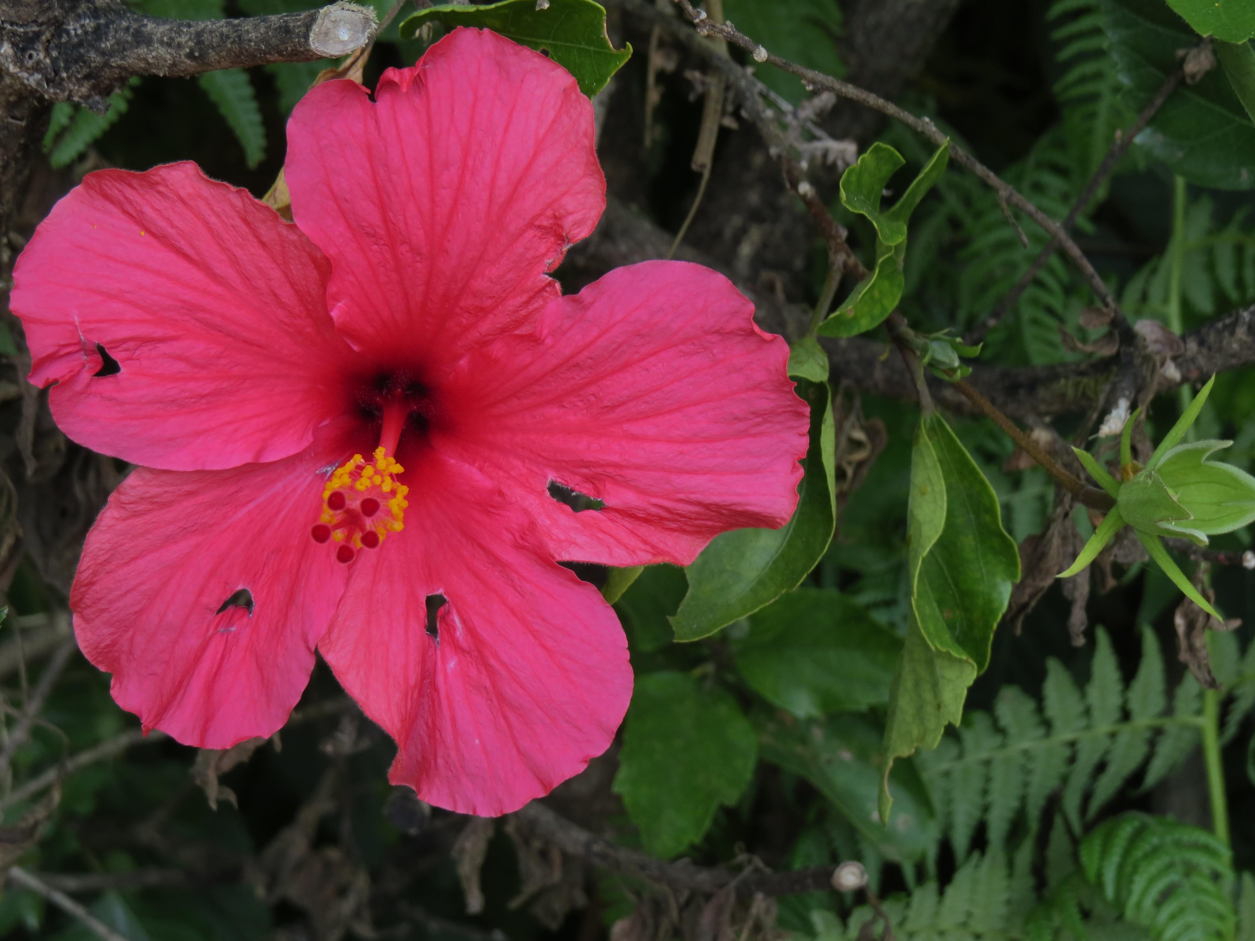 Fotoğraf Doğa Taçyaprağı Yaz çevre Renk Doğal Botanik Bitki
