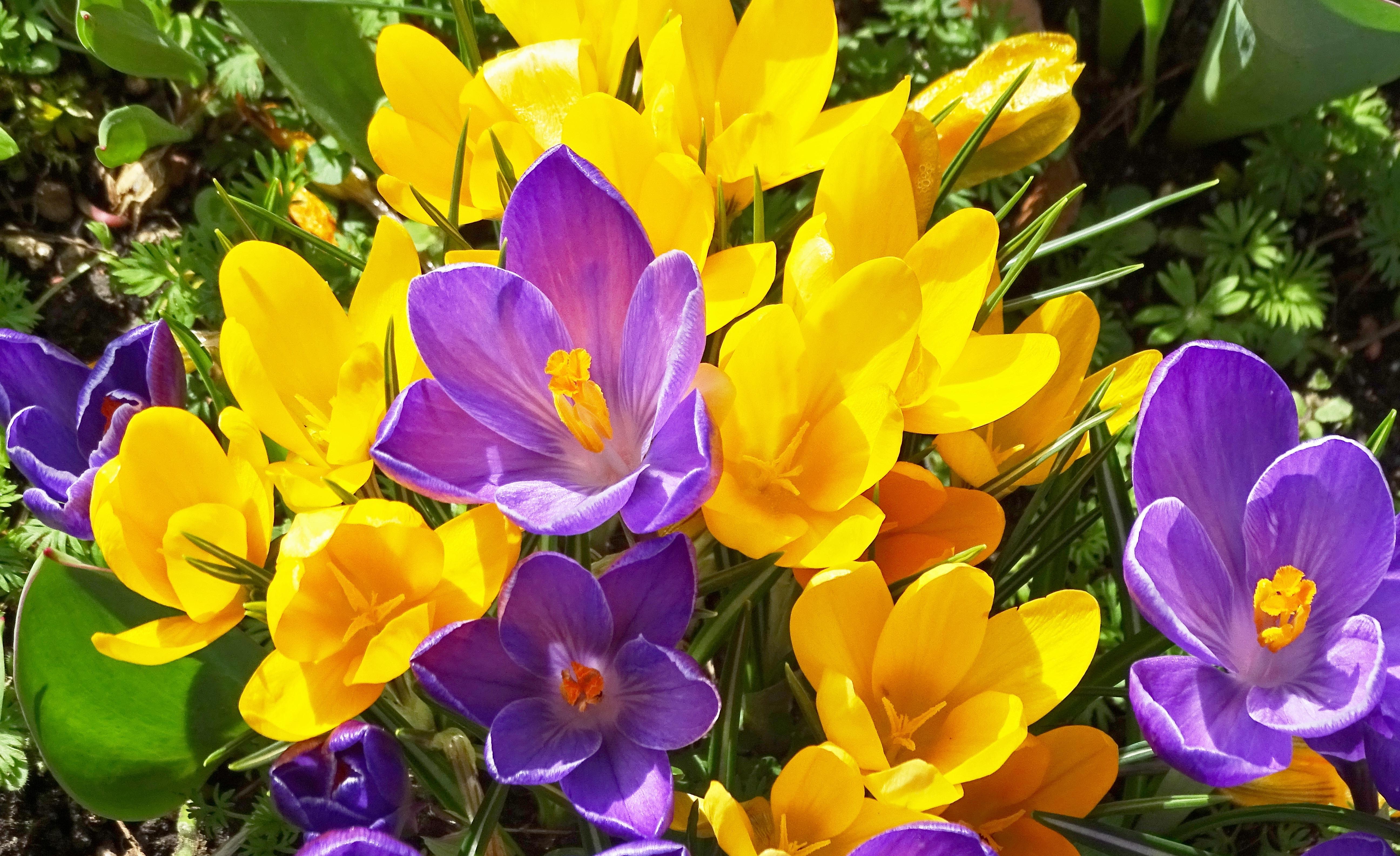 Free Images Nature Flower Purple Petal Bloom Park Colorful