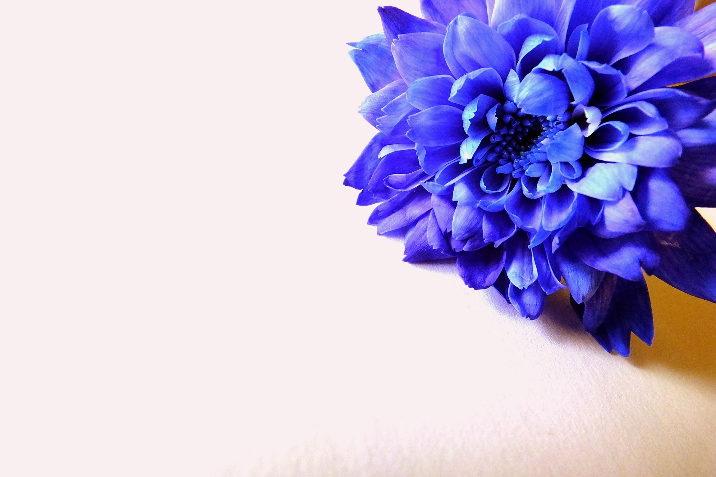 Gambar Alam Menanam Ungu Daun Bunga Biru Merapatkan Bunga