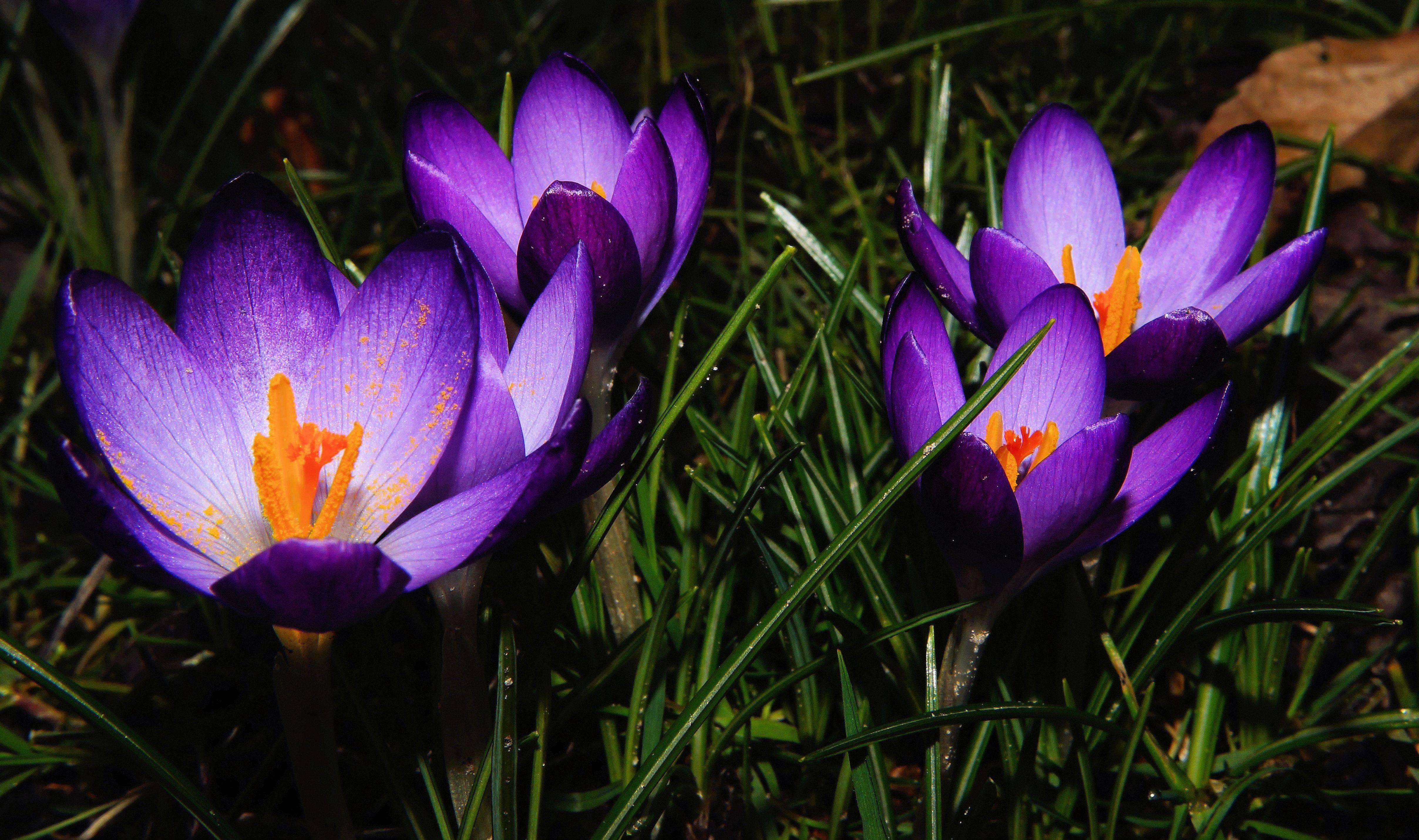Free Images Nature Purple Petal Botany Close Flora