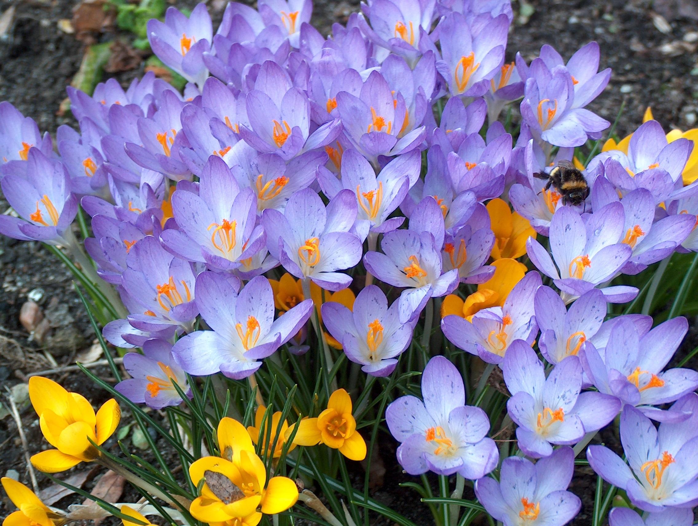 комод по цветы фото