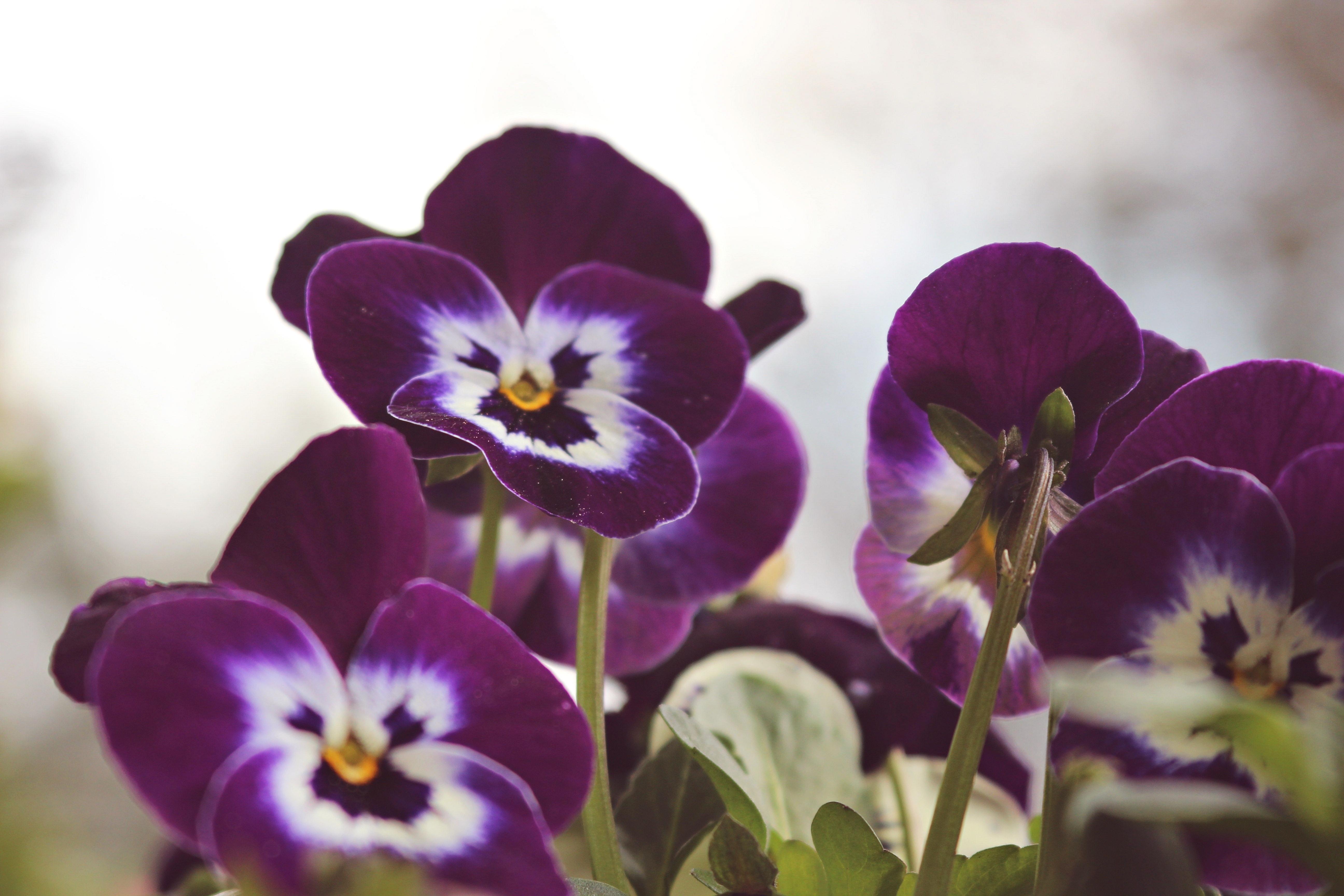 Free Images Nature Petal Summer Spring Color Flora Purple