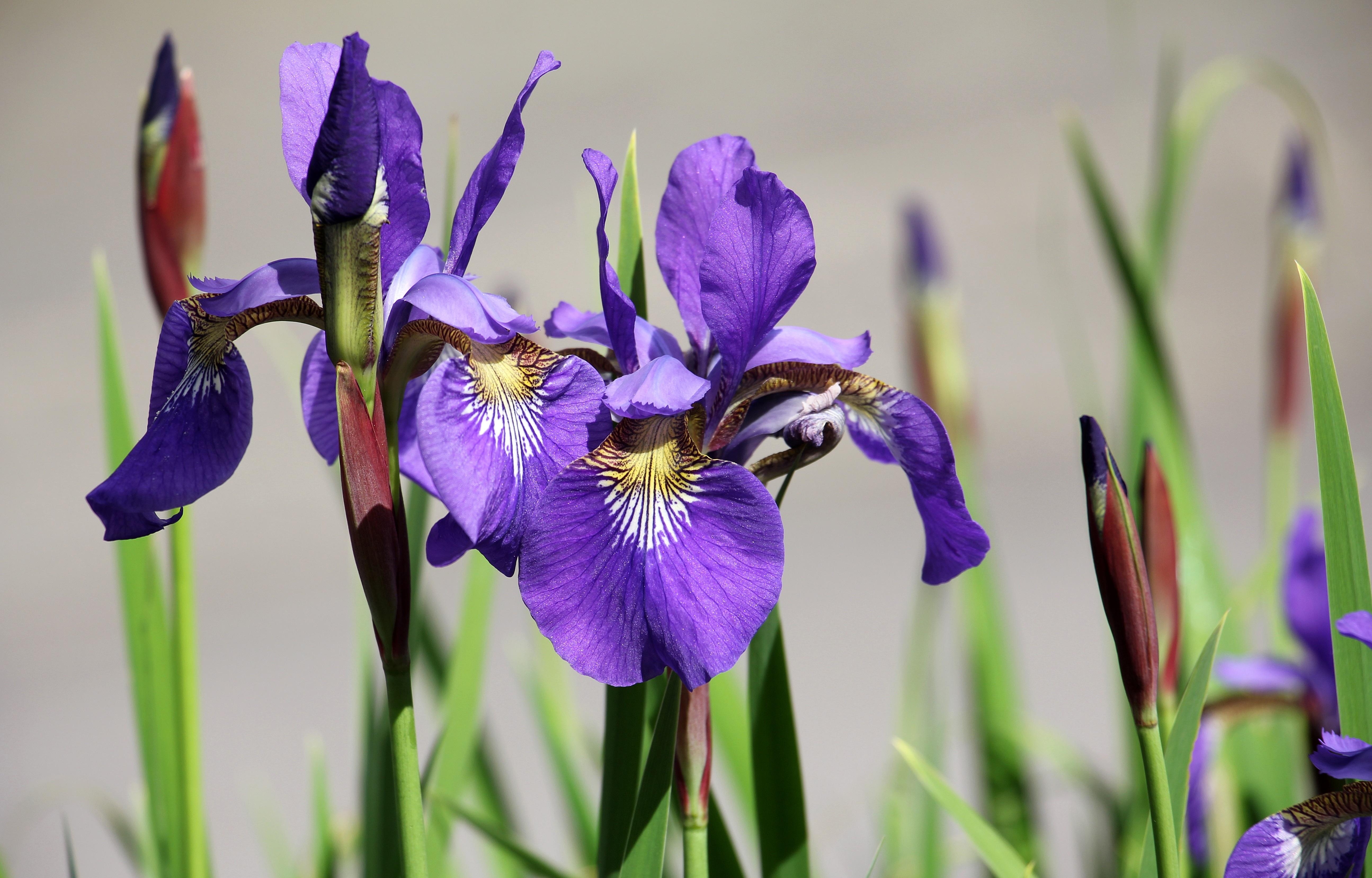 Free Images Nature Purple Botany Garden Close Flora Flowers