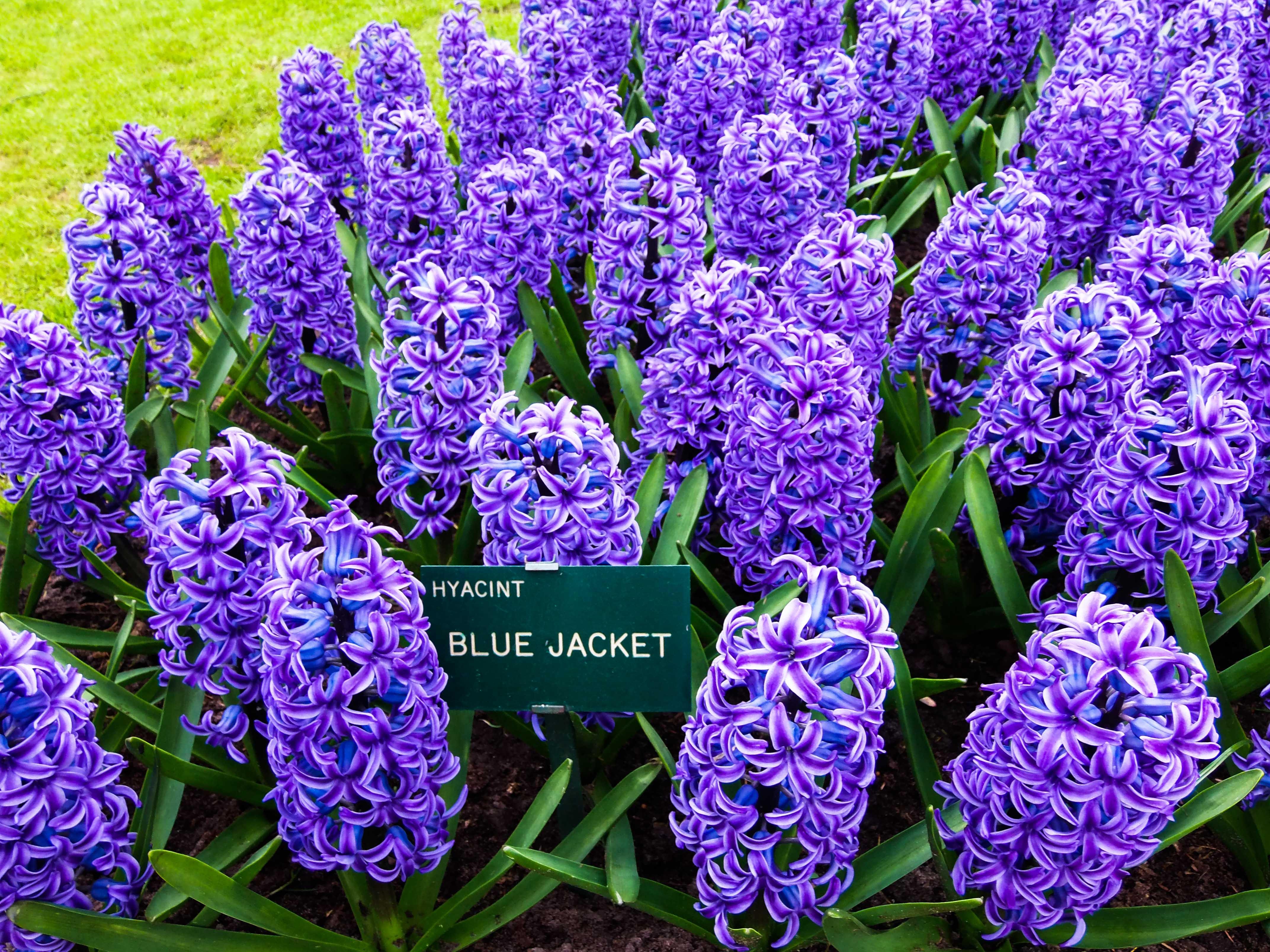 Free Images Nature Spring Macro Purple Flowers Purple Flower