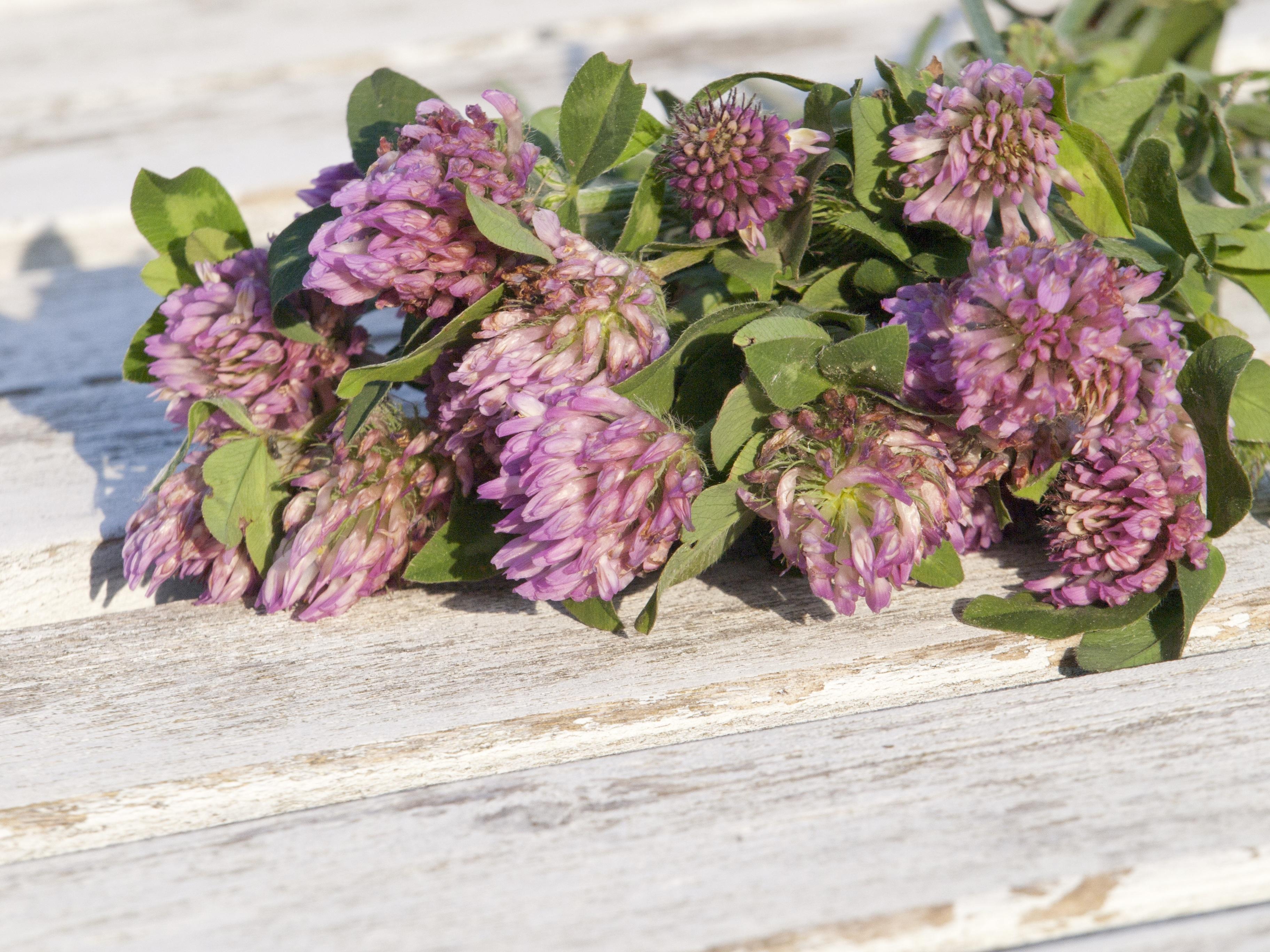 Images Gratuites La Nature Fleur Violet Ete Herbe Produire