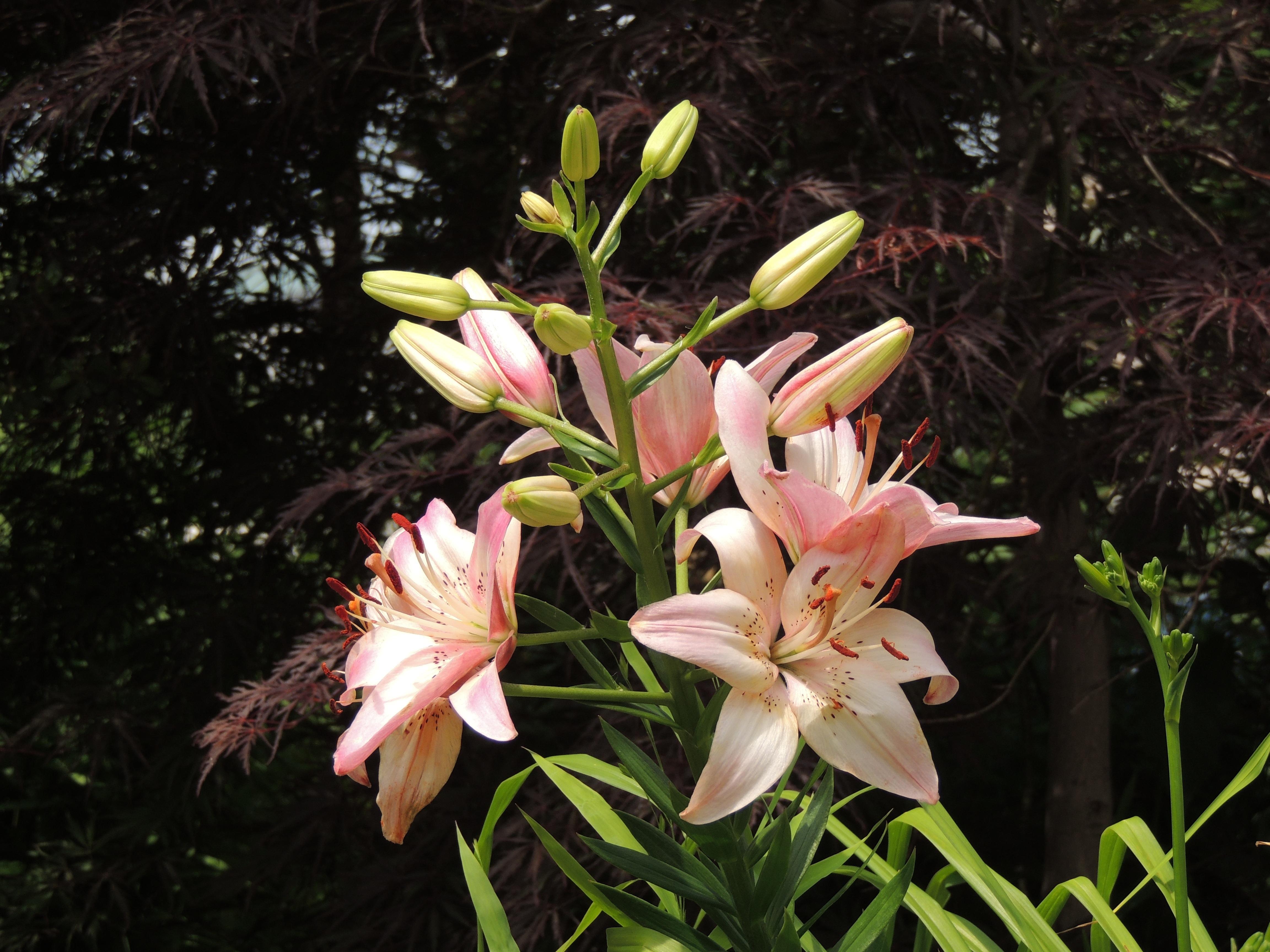 images gratuites la nature fleur t printemps botanique jardin flore v g tation. Black Bedroom Furniture Sets. Home Design Ideas