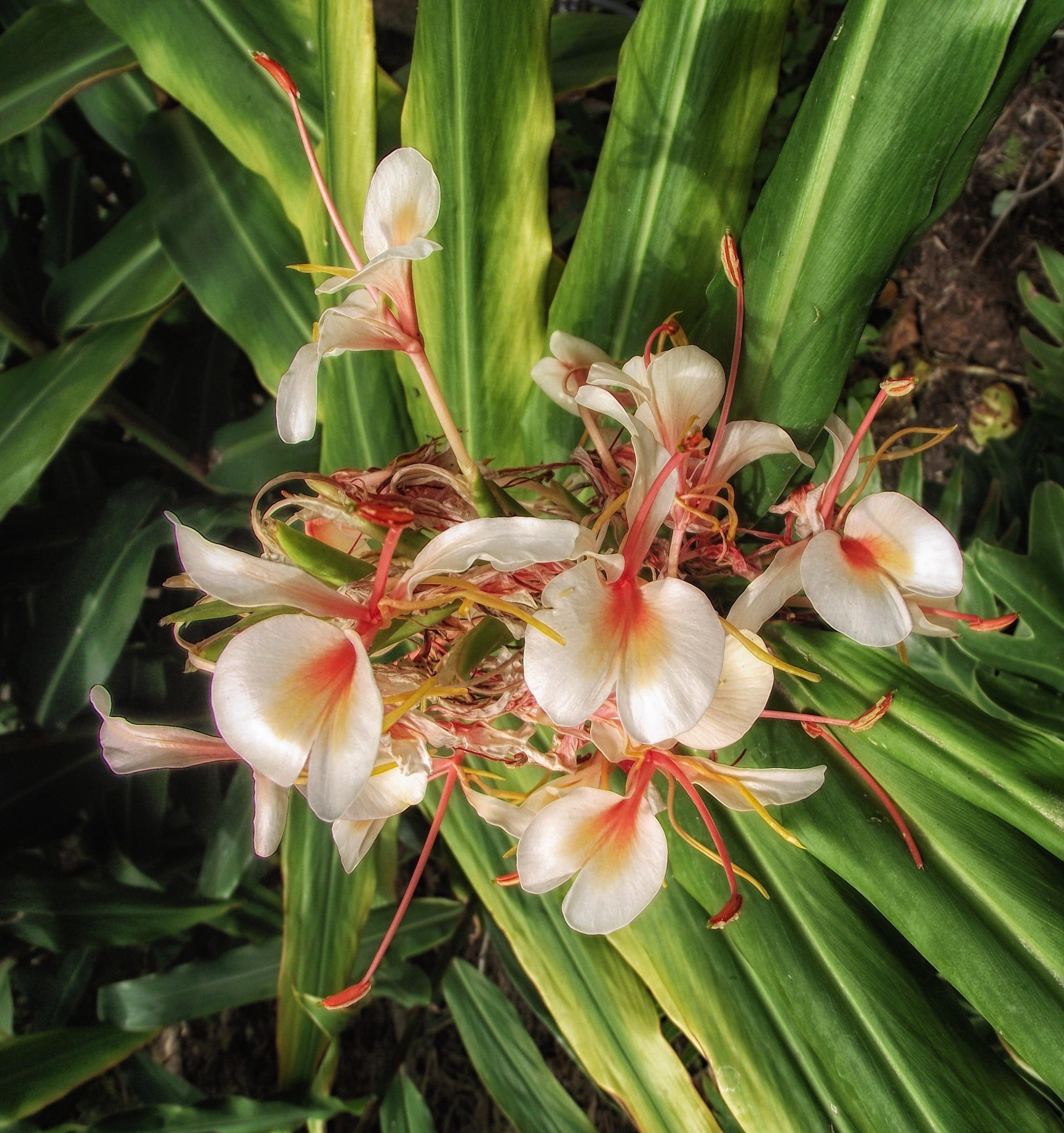 Images gratuites la nature fleur t printemps flore for Plante exterieur a fleur rouge