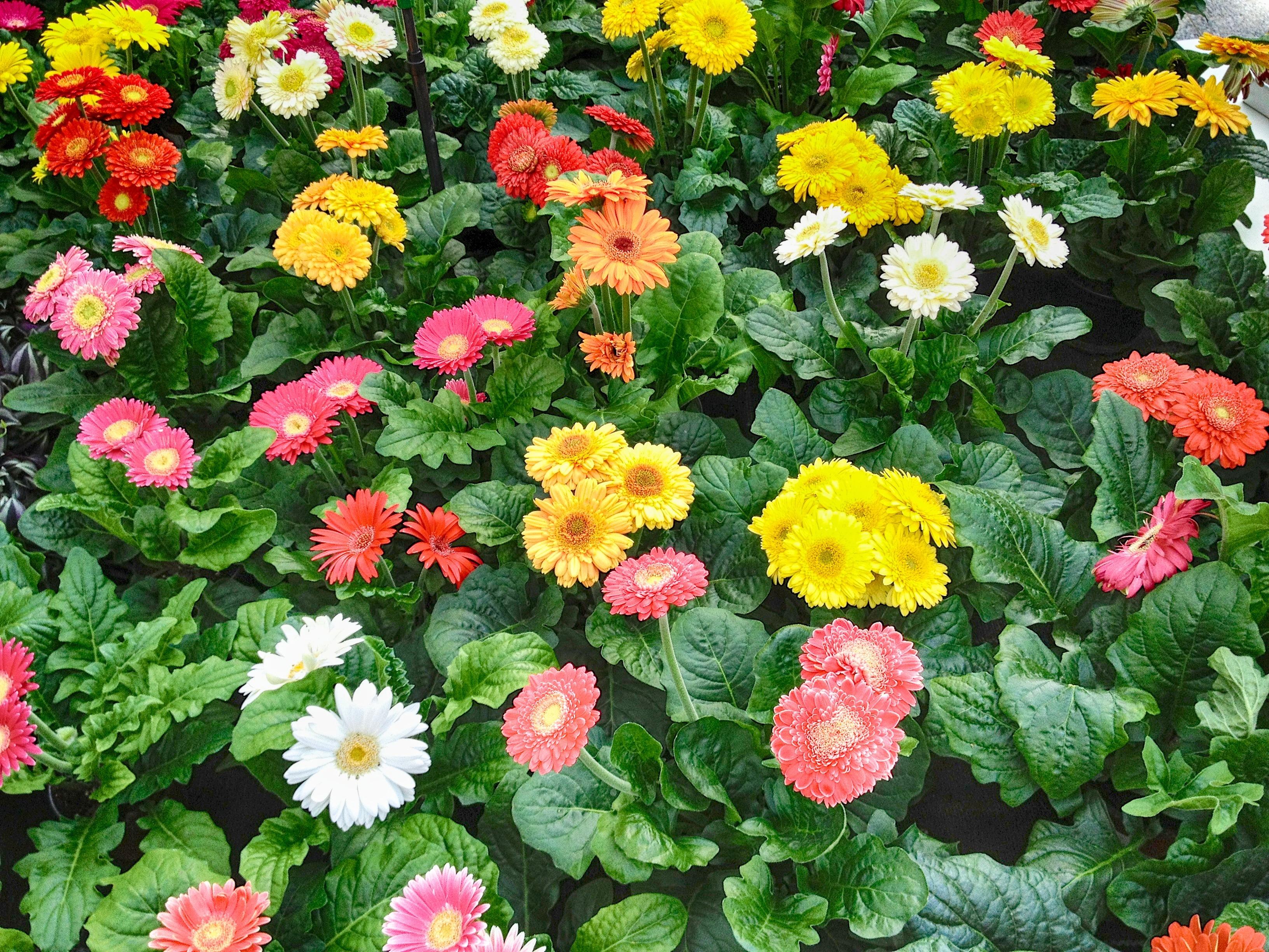 Free Images Nature Flower Summer Spring Macro Garden Plants