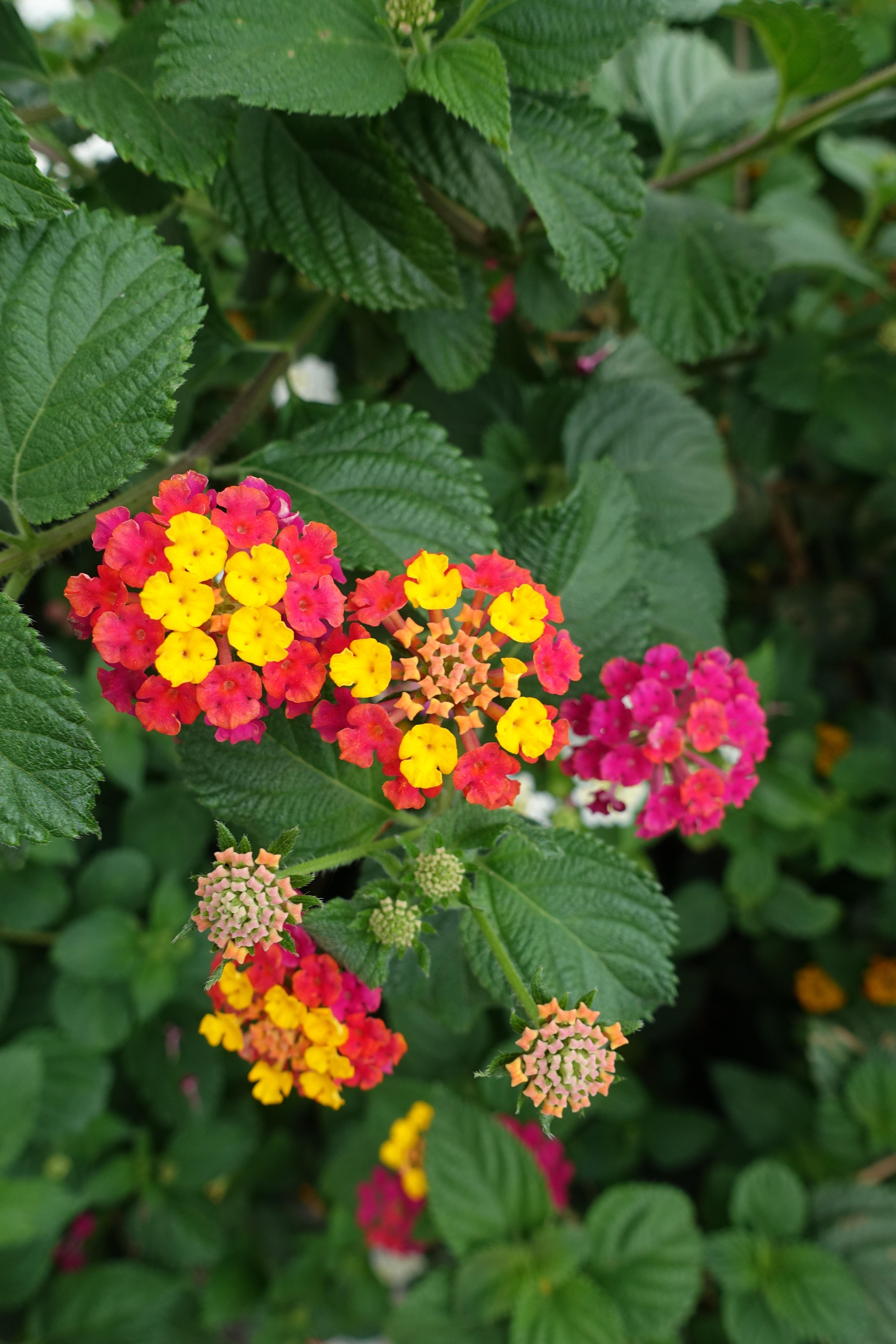 Images Gratuites : la nature, fleur, été, rouge, herbe, Macro ...