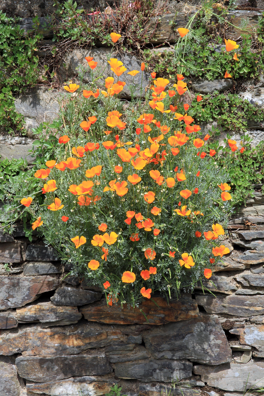 Free Images Nature Flower Wall Orange Autumn Botany Yellow