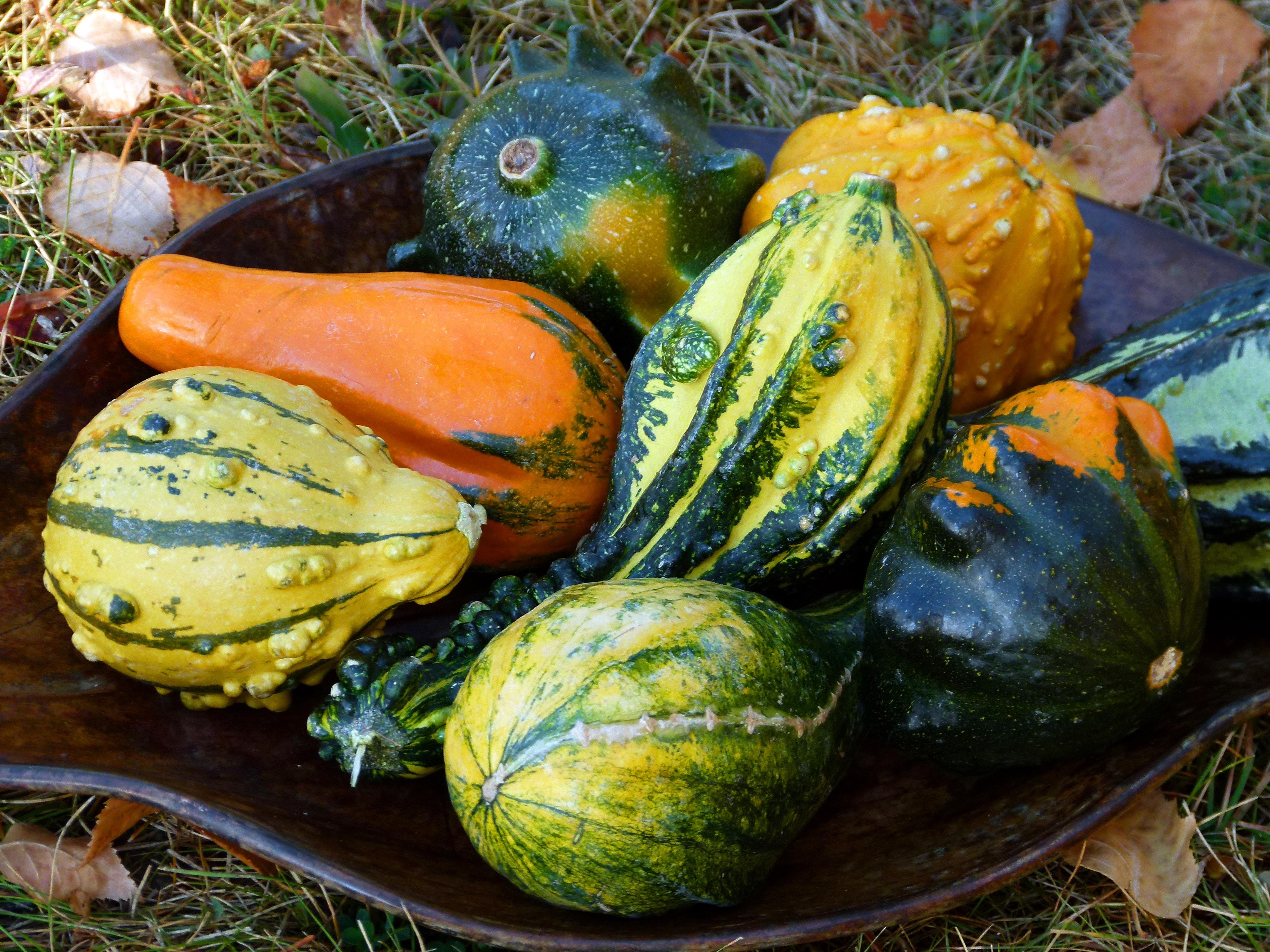 coloriage fruits legumes automne meilleures id es legumes d hiver a planter. Black Bedroom Furniture Sets. Home Design Ideas