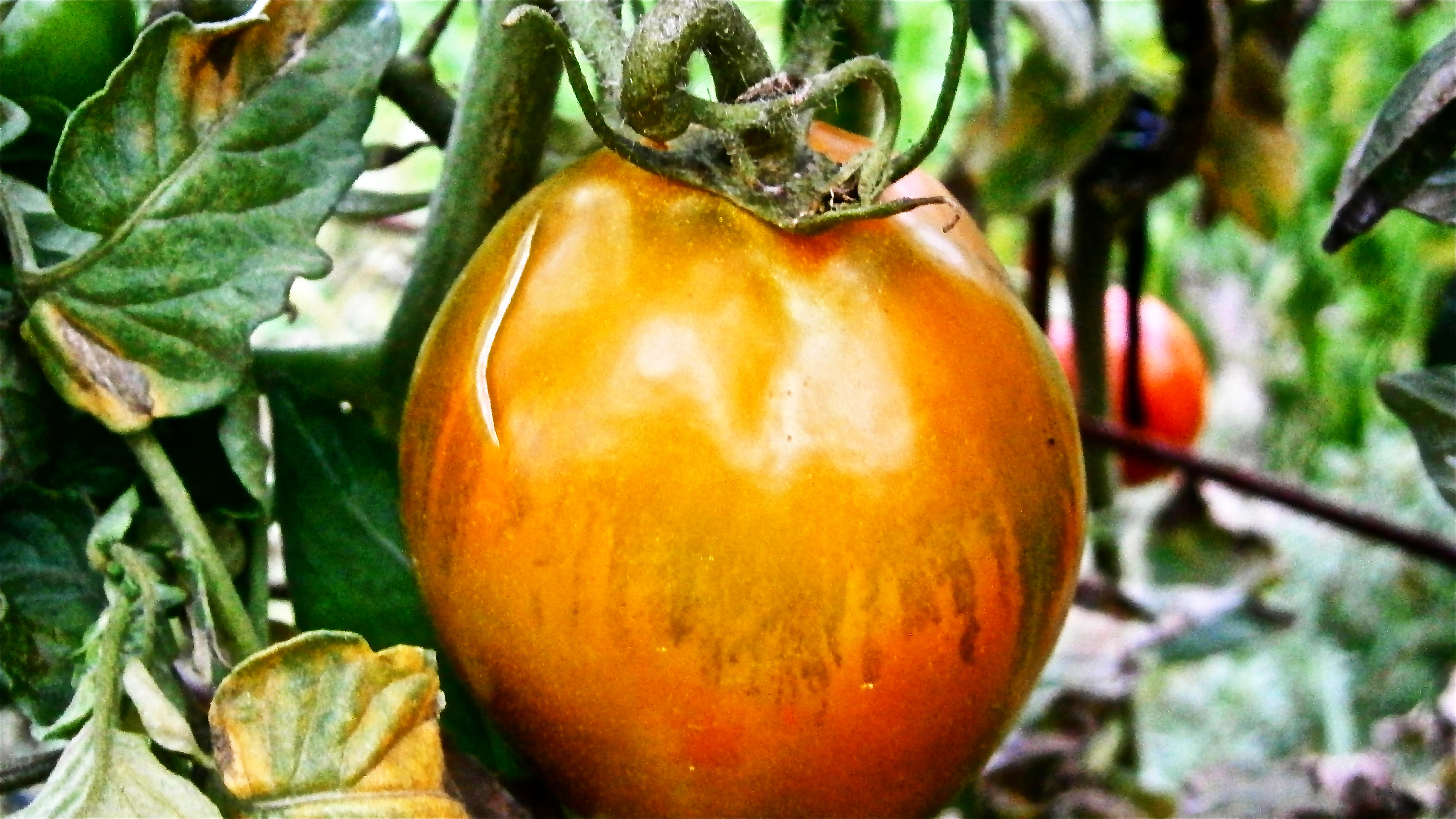 Kostenlose foto  Natur Frucht Lebensmittel produzieren Gemse