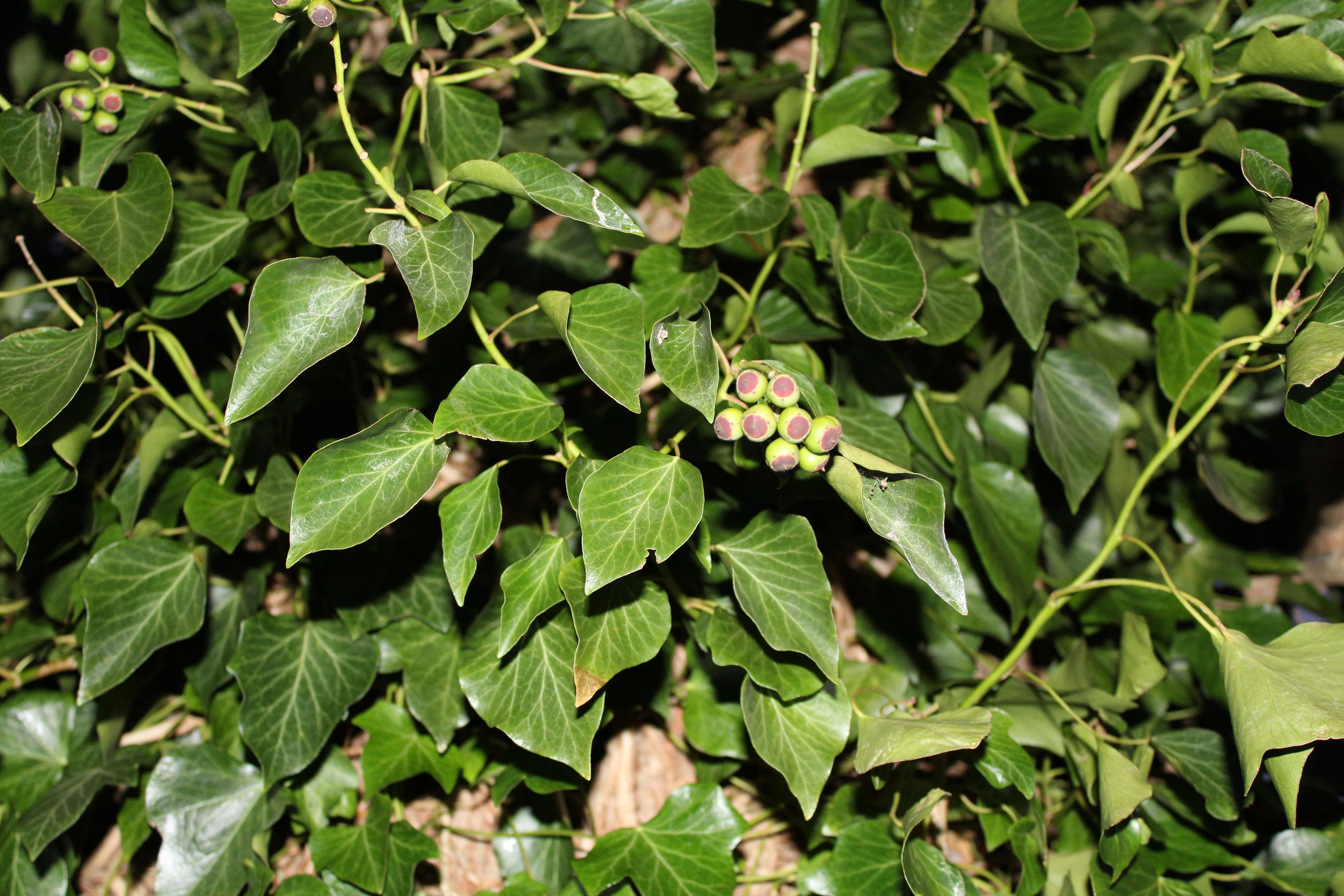 Gewaltig Grüne Pflanzen Beste Wahl Natur Pflanze Frucht Blatt Blume Lebensmittel Grün
